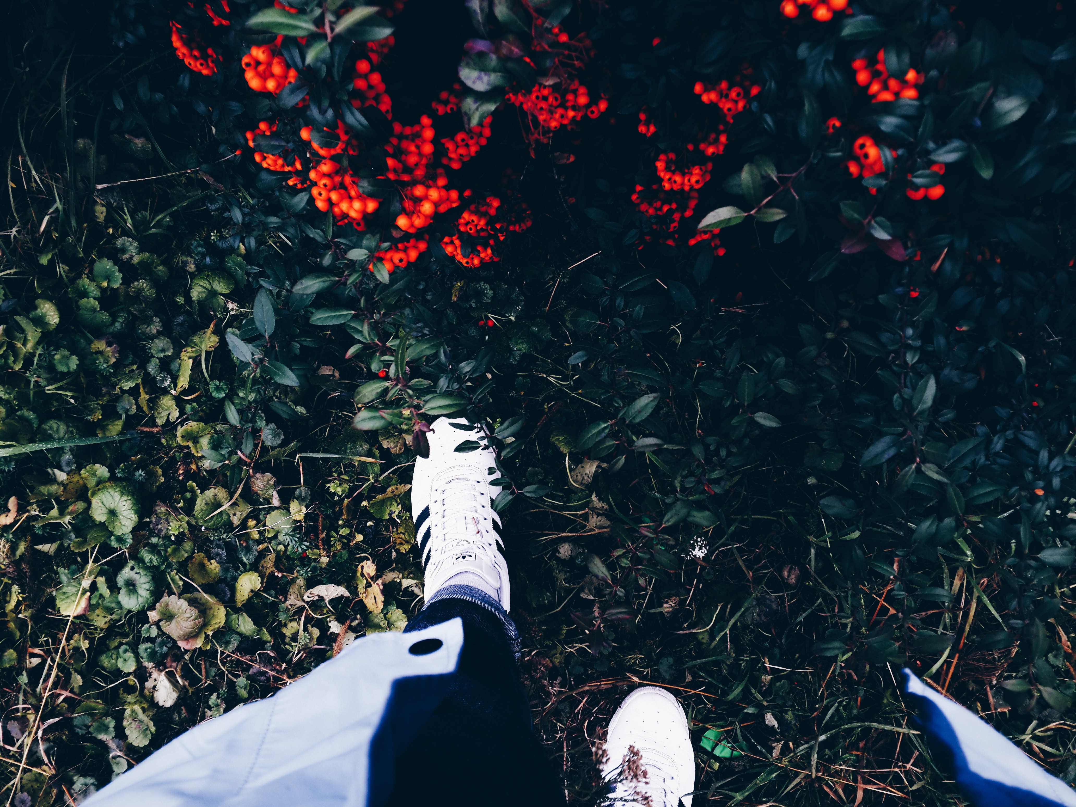 Person in white sneakers on green grass near flowering shrub photo