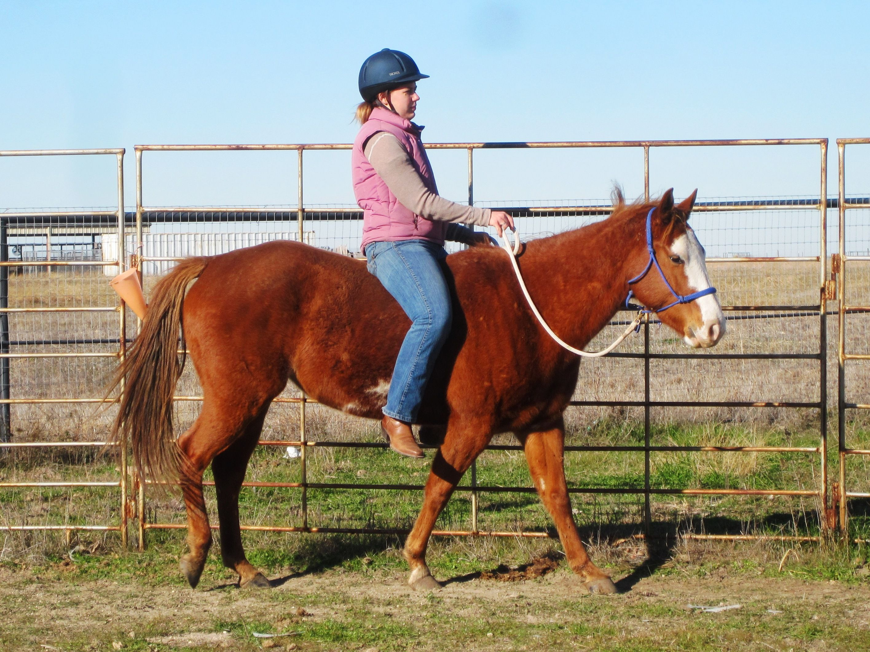 person riding a horse - Google Search   Pencey   Pinterest