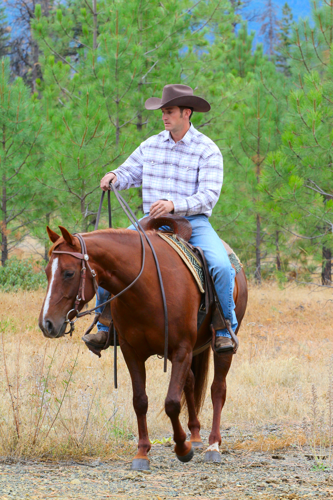 Five Common Mistakes Made When Feeding A Horse   The Bucksaver