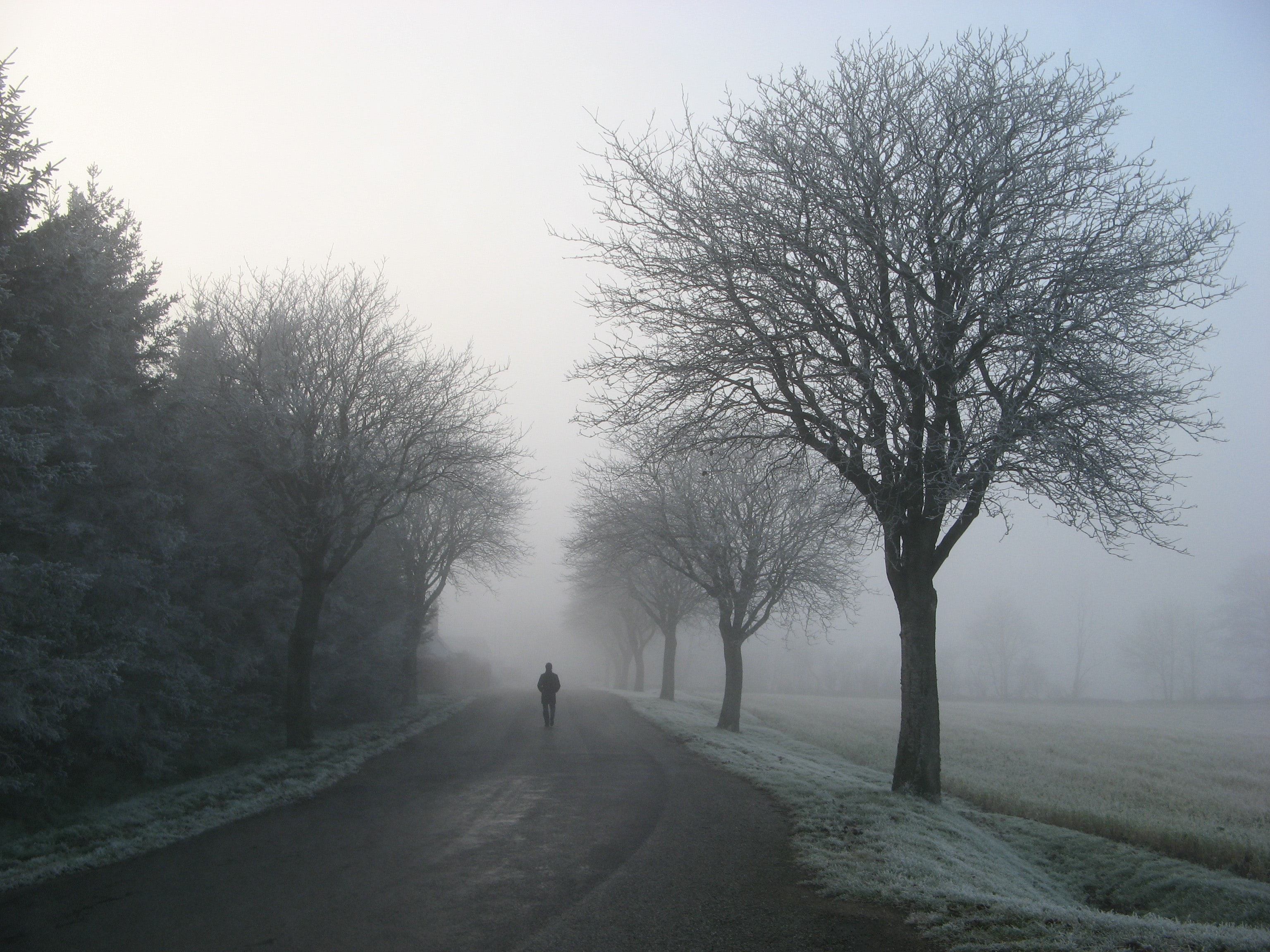 Person walking on road between trees photo