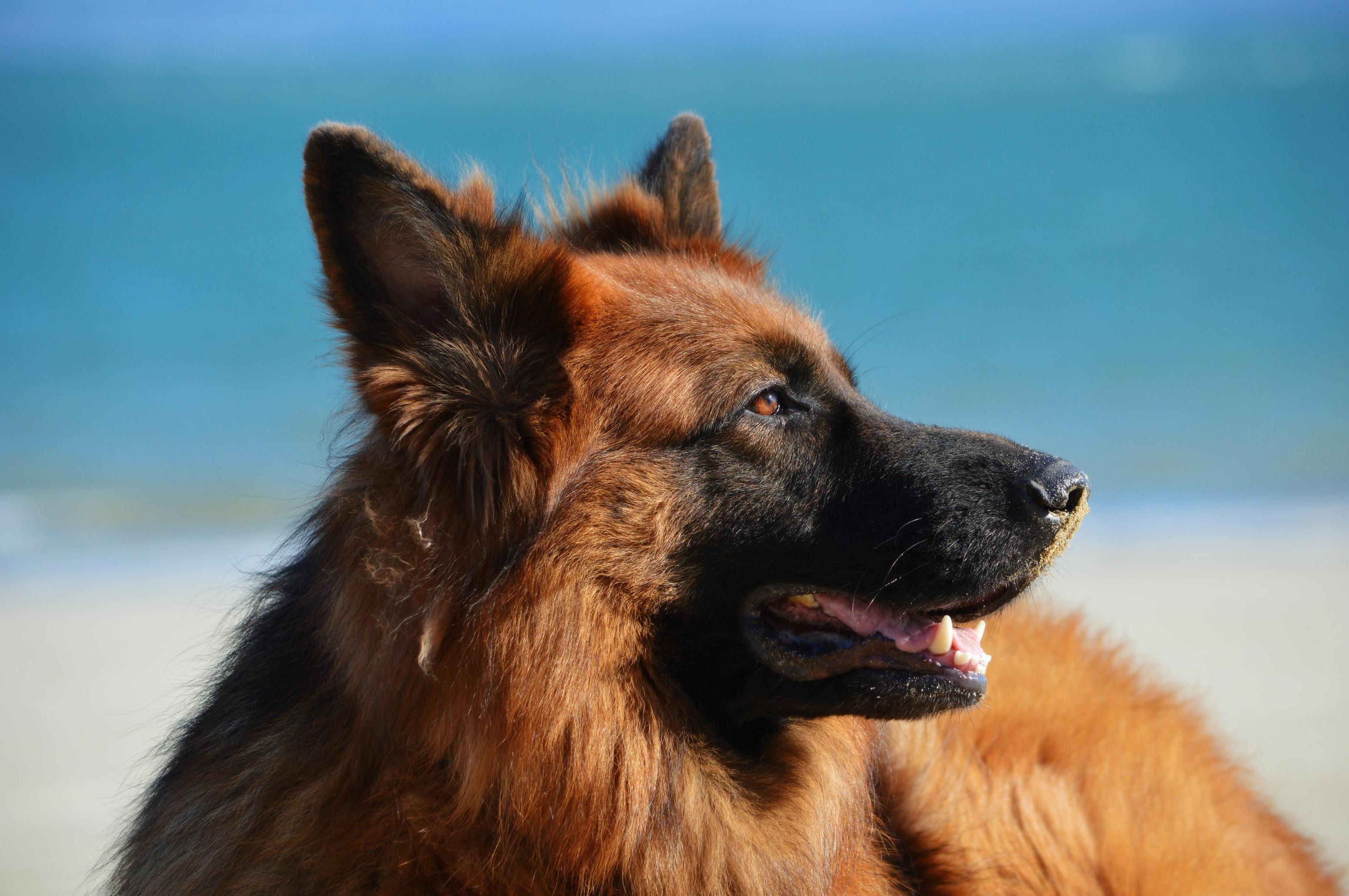 Pet, Brown, Dog, Friend, Loyal, HQ Photo