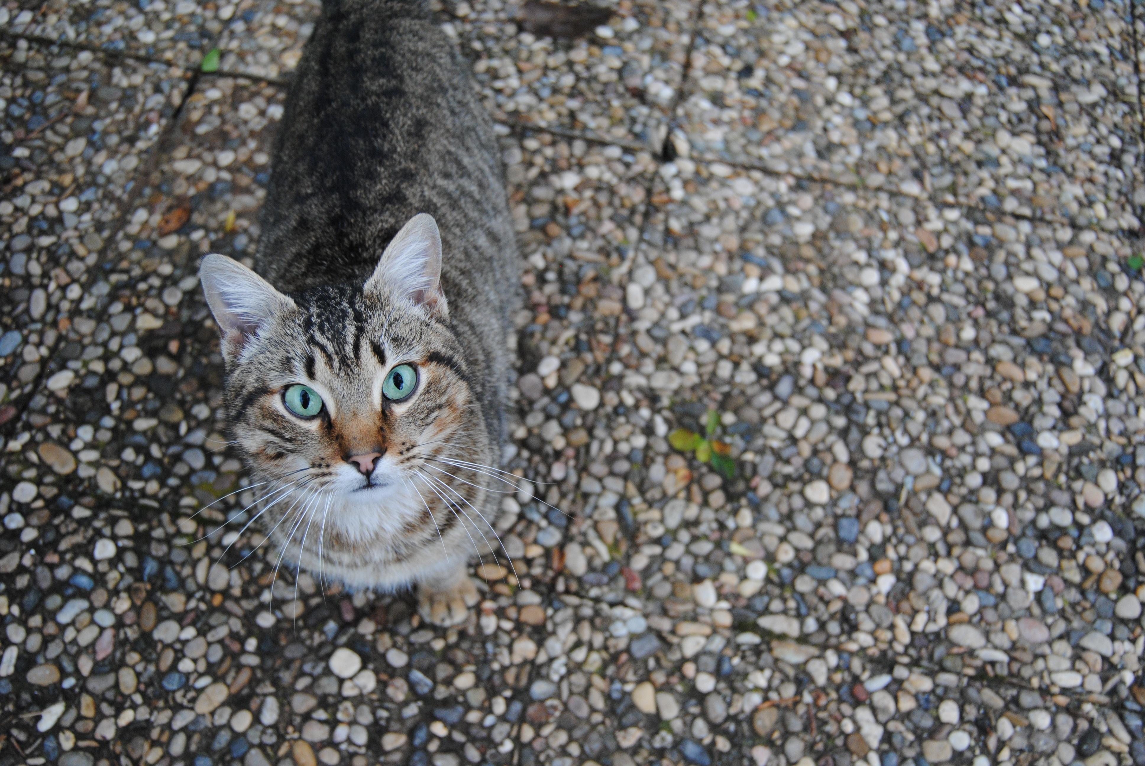 Pet, Cat, Meow, Nature, Persian, HQ Photo