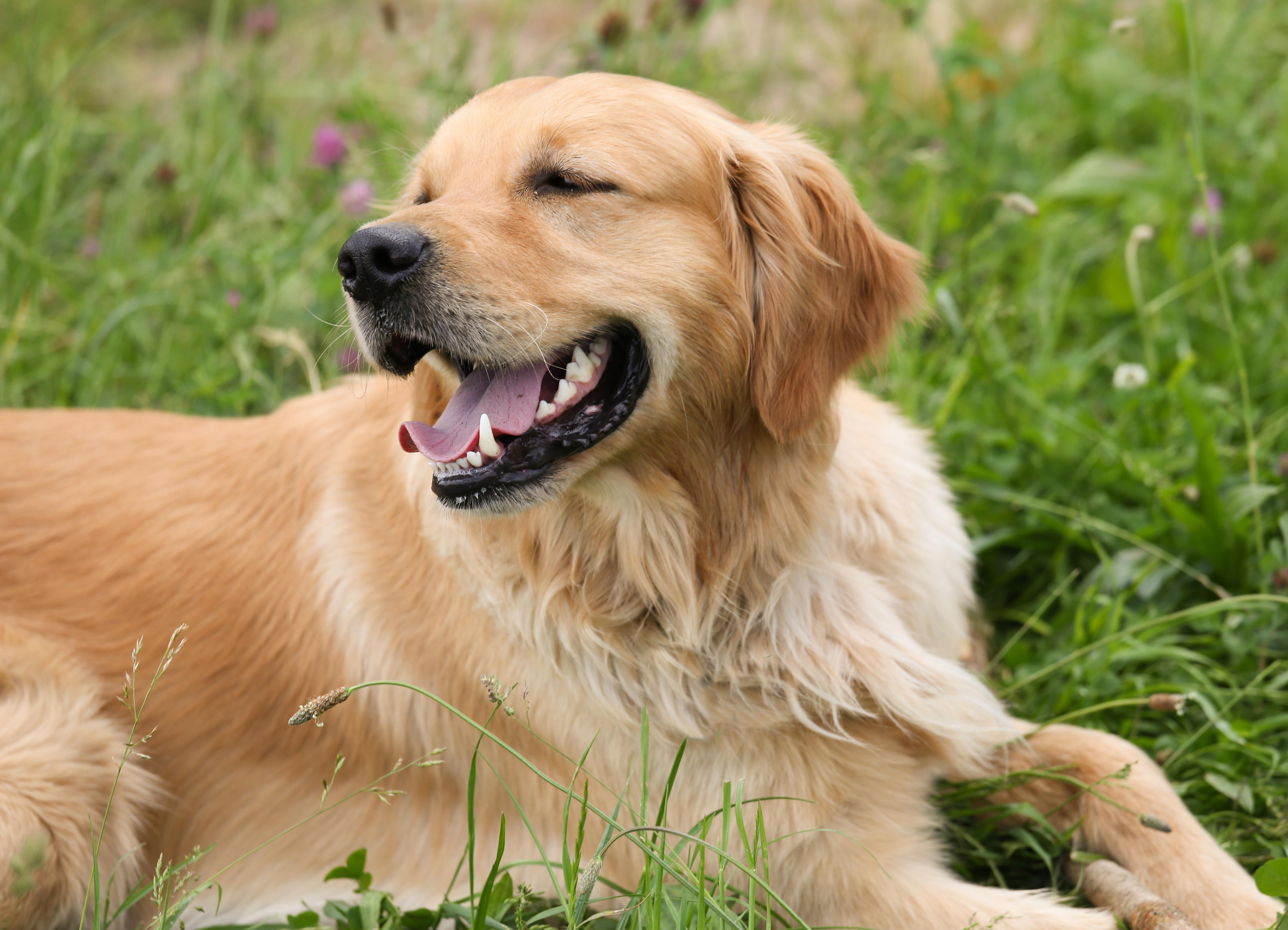 Pet, Animal, Dog, Friend, Loyal, HQ Photo