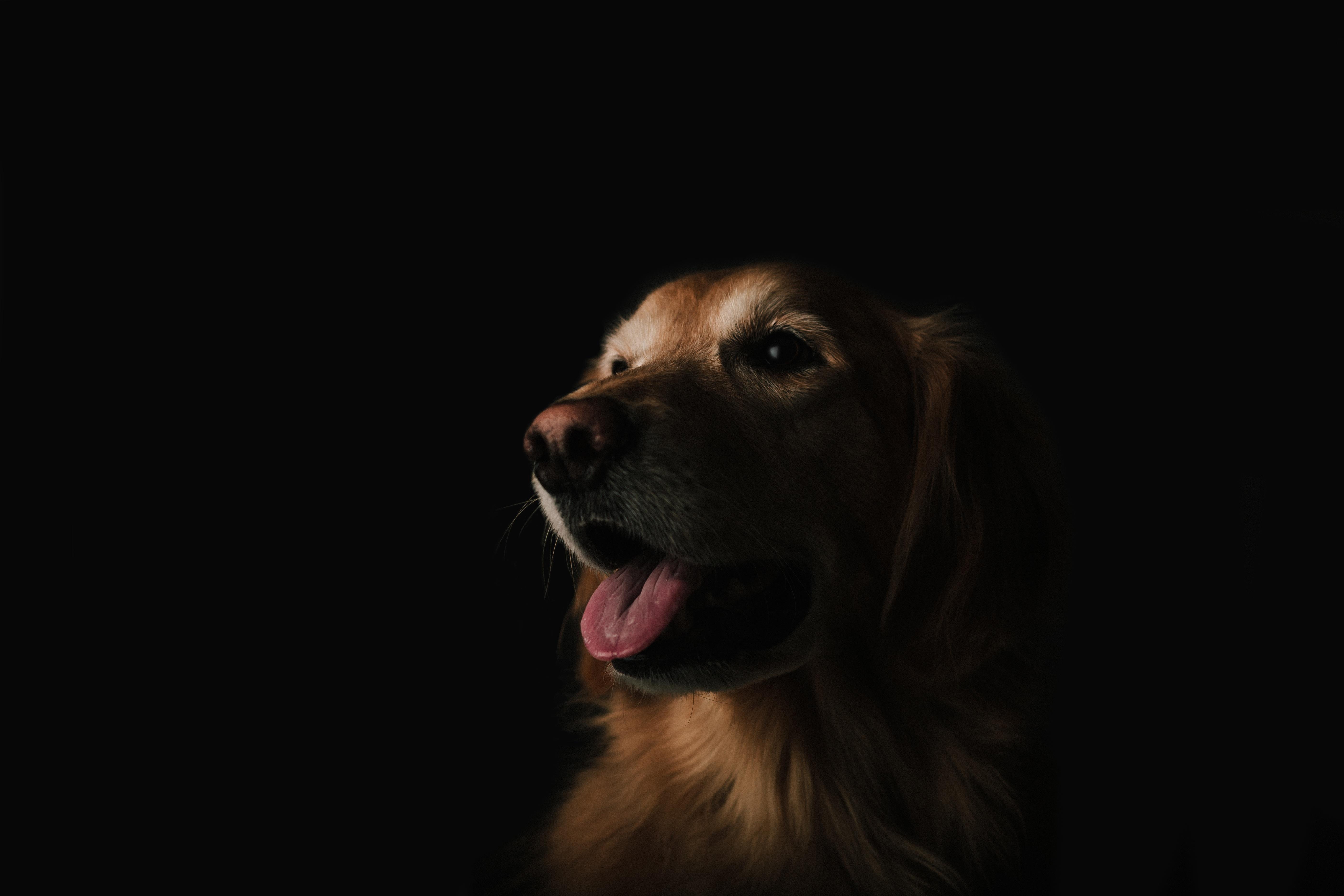 Pet, Train, Order, Friend, Dog, HQ Photo