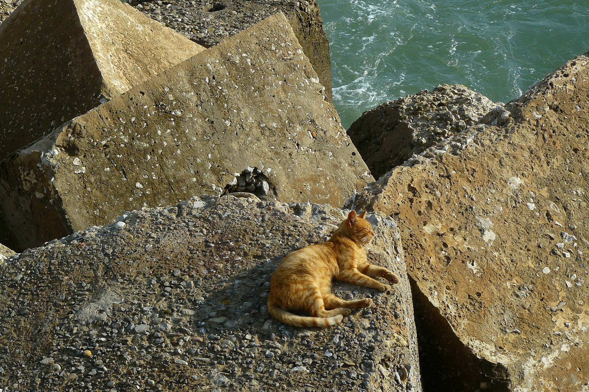 Pet, Animal, Cat, Friend, Loyal, HQ Photo