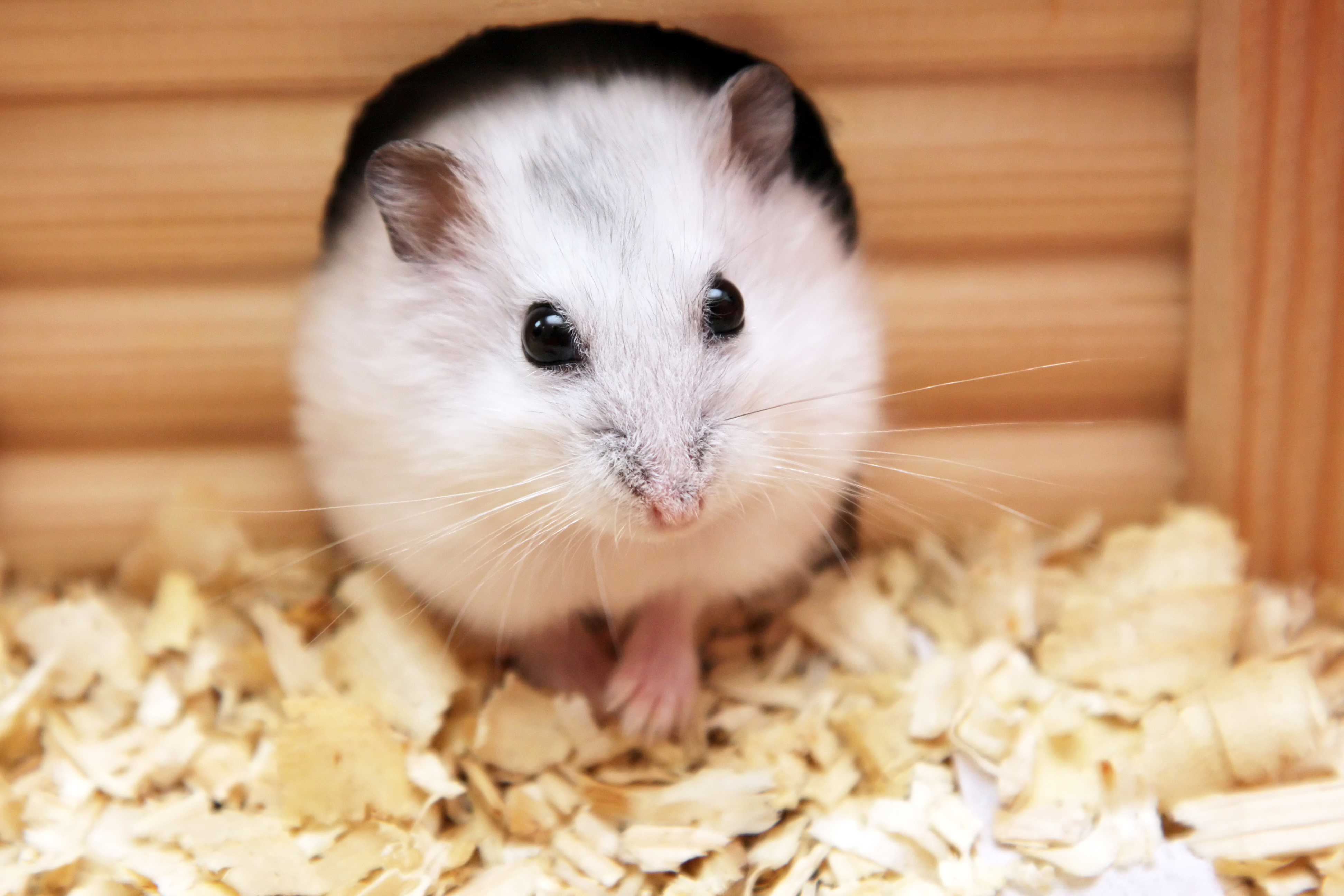 Facts About Small Mammals as Pets | Petfinder