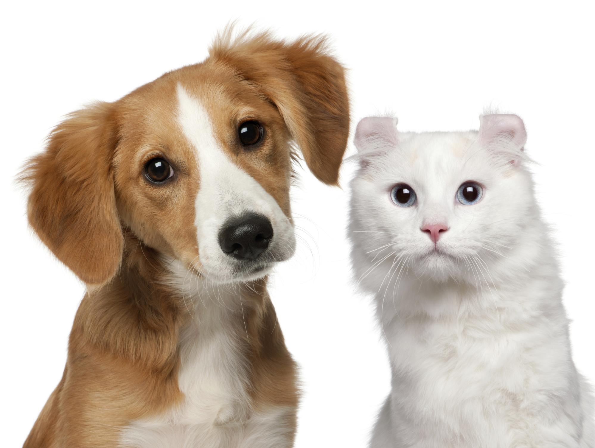 pet-dog-cat - Photo #1598 -
