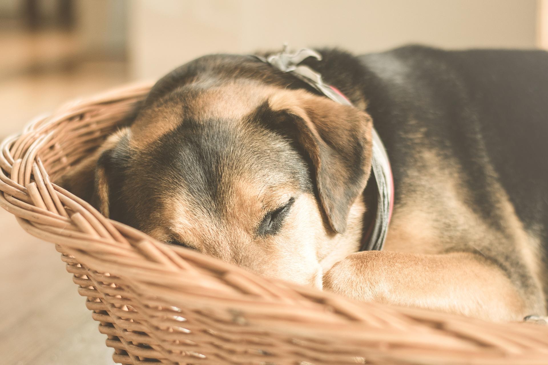 Pet dog photo