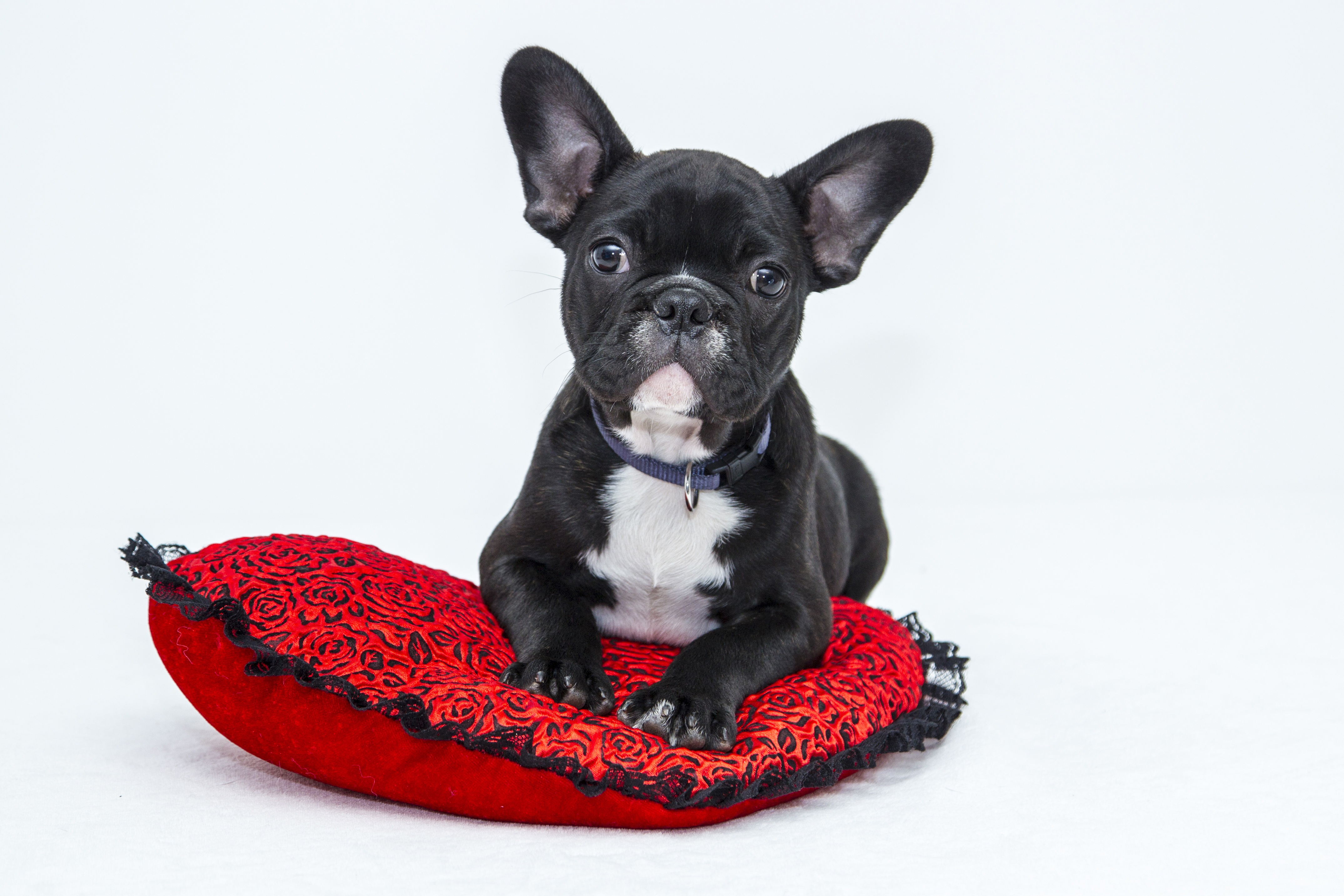 Top Tips For Having A Well Behaved Dog in Lynchburg VA | Pet Craze