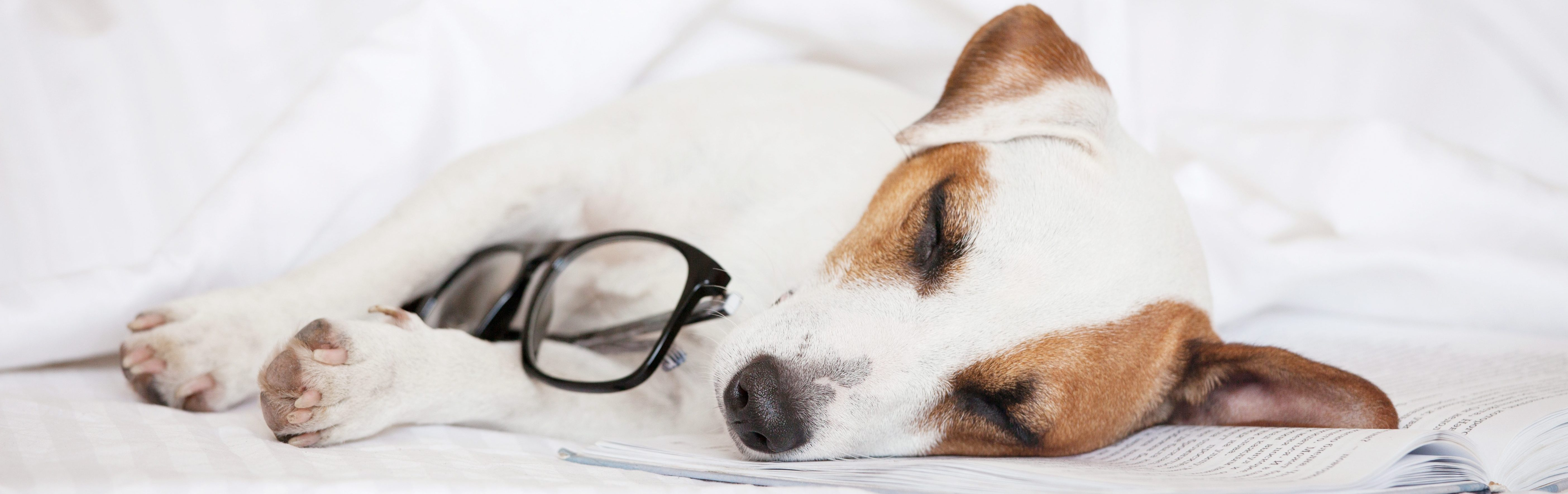 Should You Sleep With Your Pet? Health Risks and Benefits | Tuck Sleep