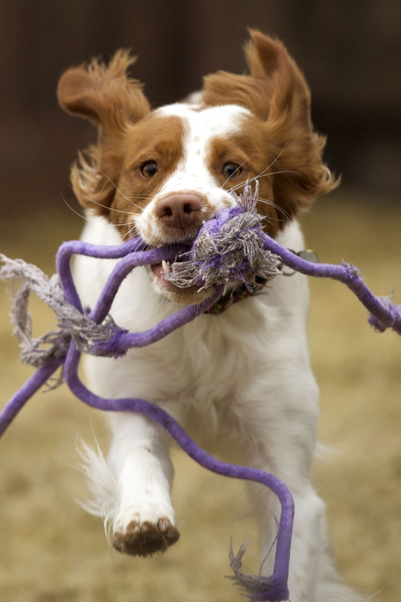 40 Best Medium Sized Dog Breeds - List of Popular Cute Medium Sized ...