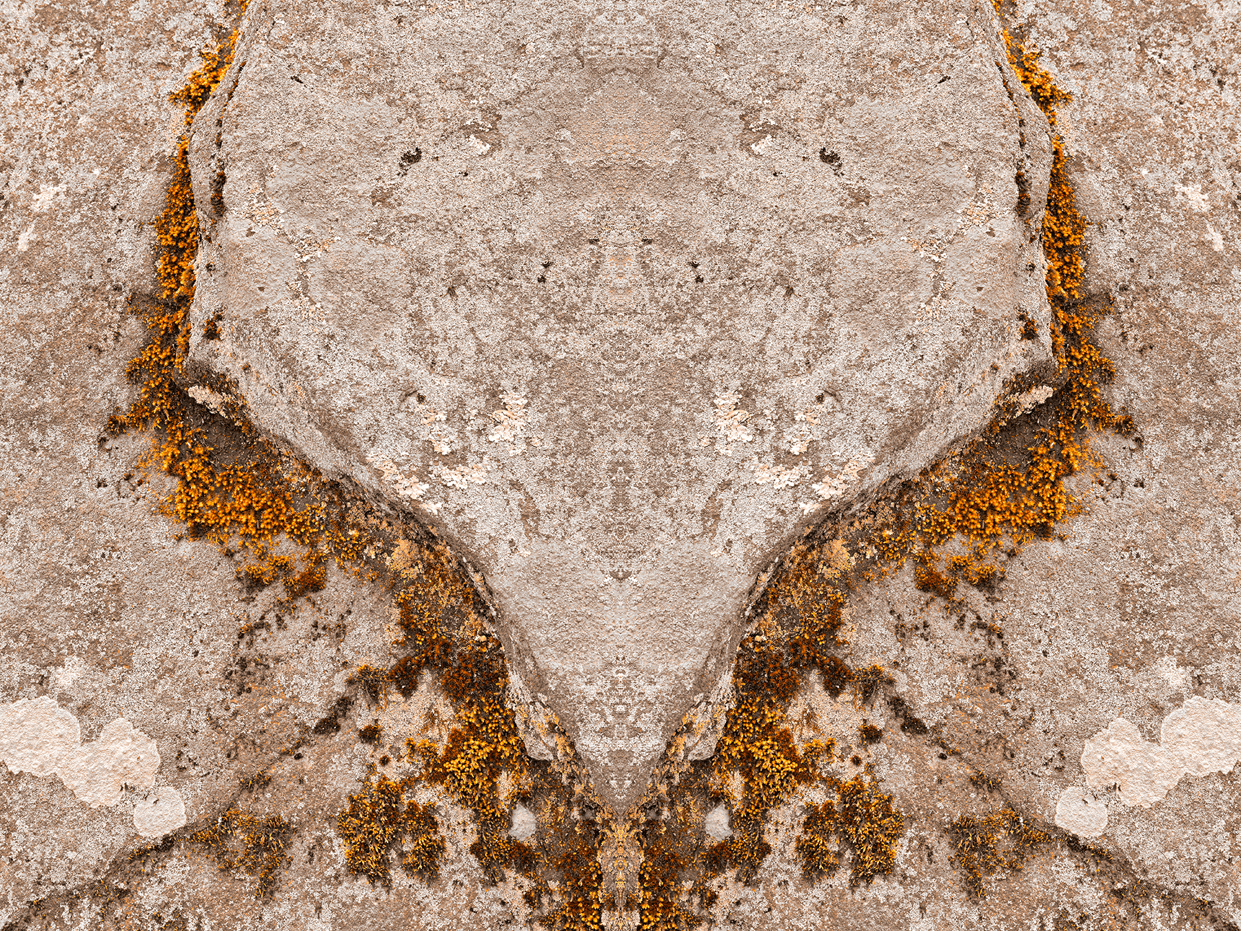 Phoenix Moss Wings, Abstract, Moss, Phoenix, Perspective, HQ Photo