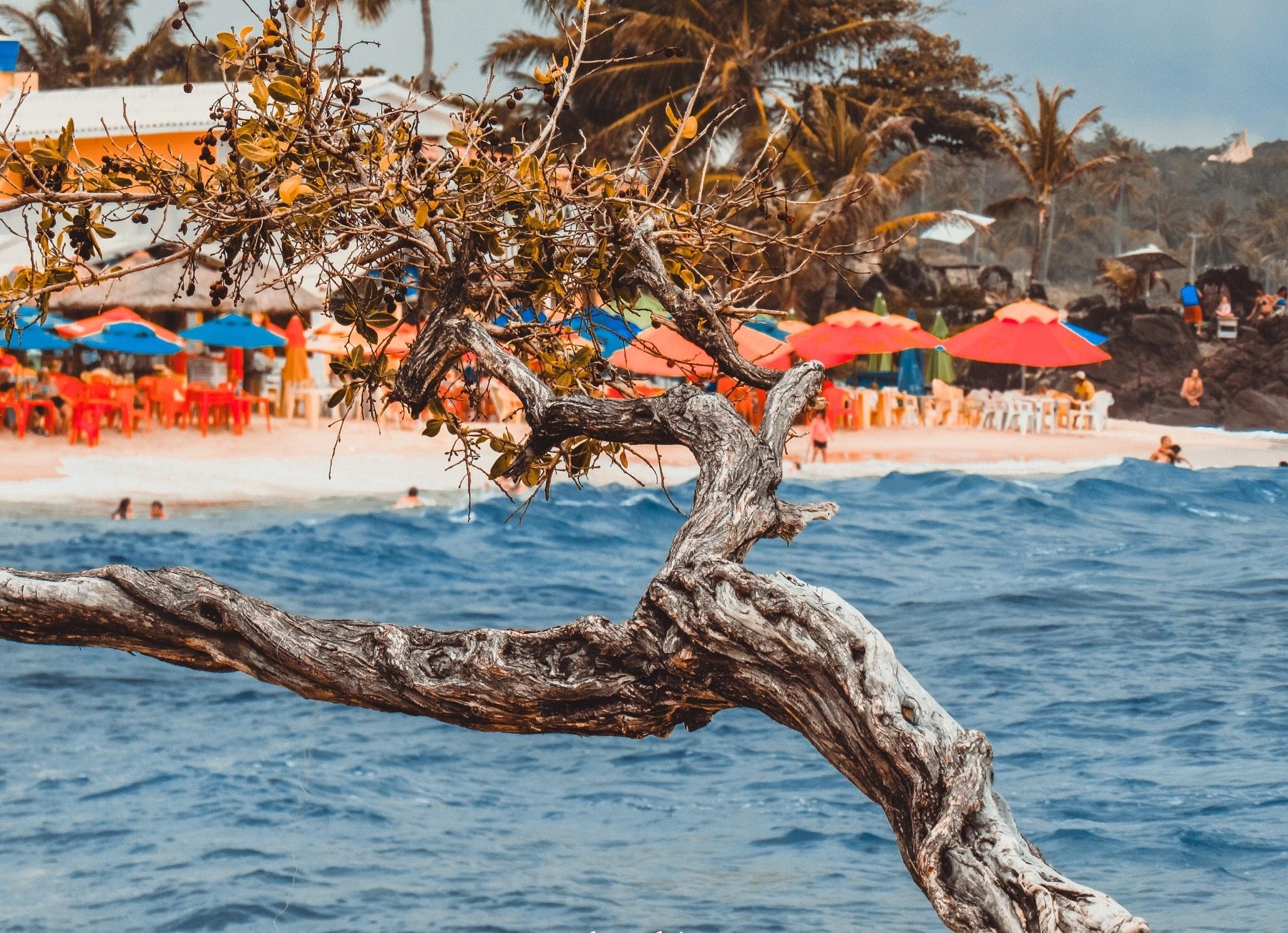 Seashore tree trunk