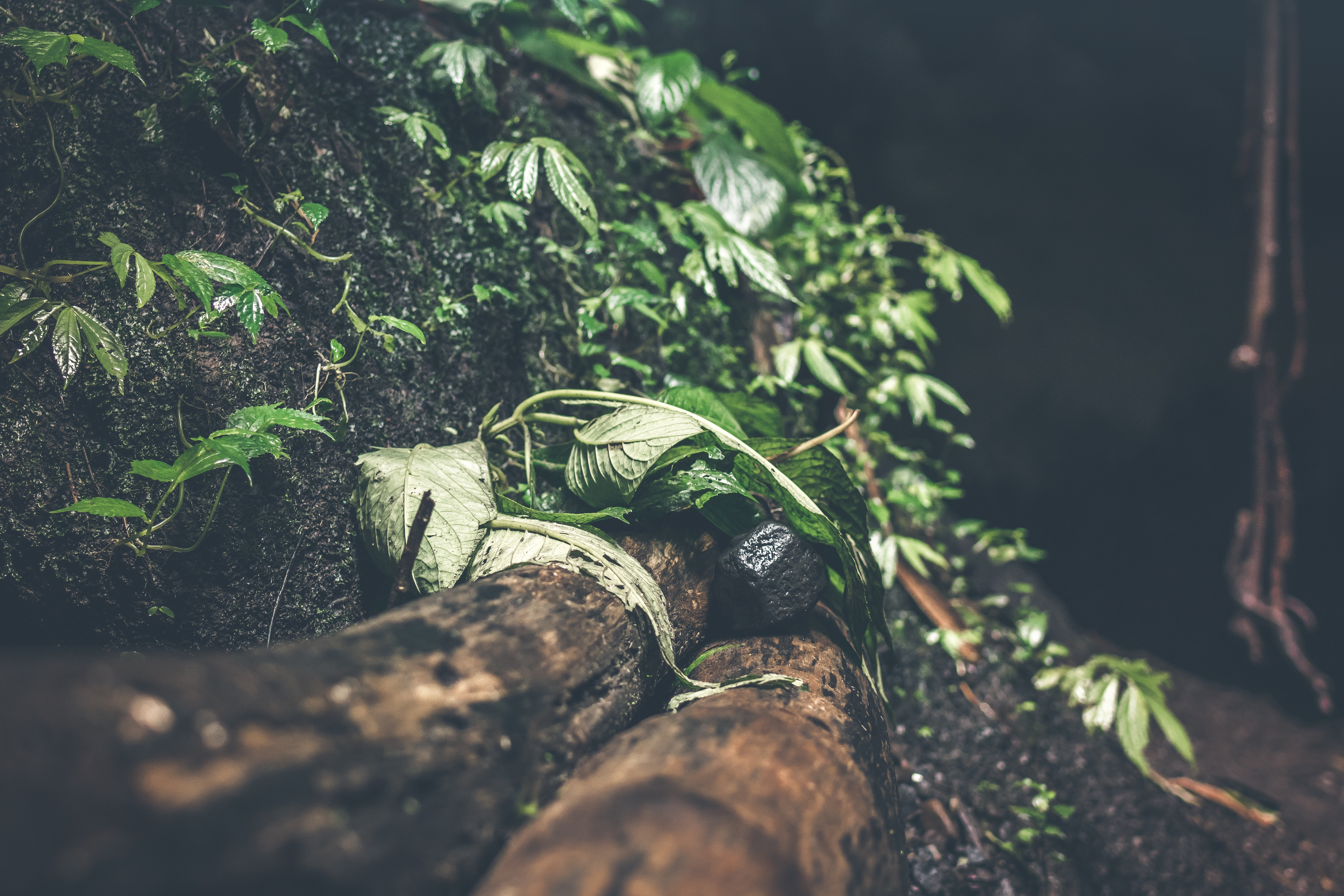 Photo of Green Plants, Soil, Summer, Root, Travel, HQ Photo