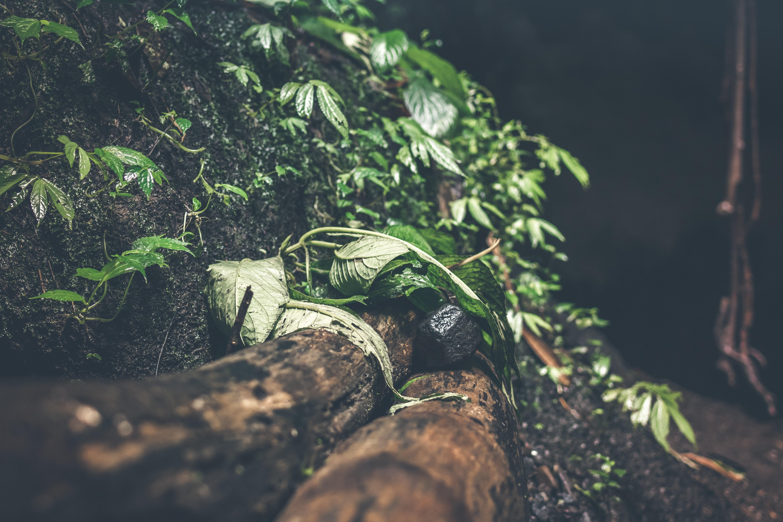 Photo of green plants