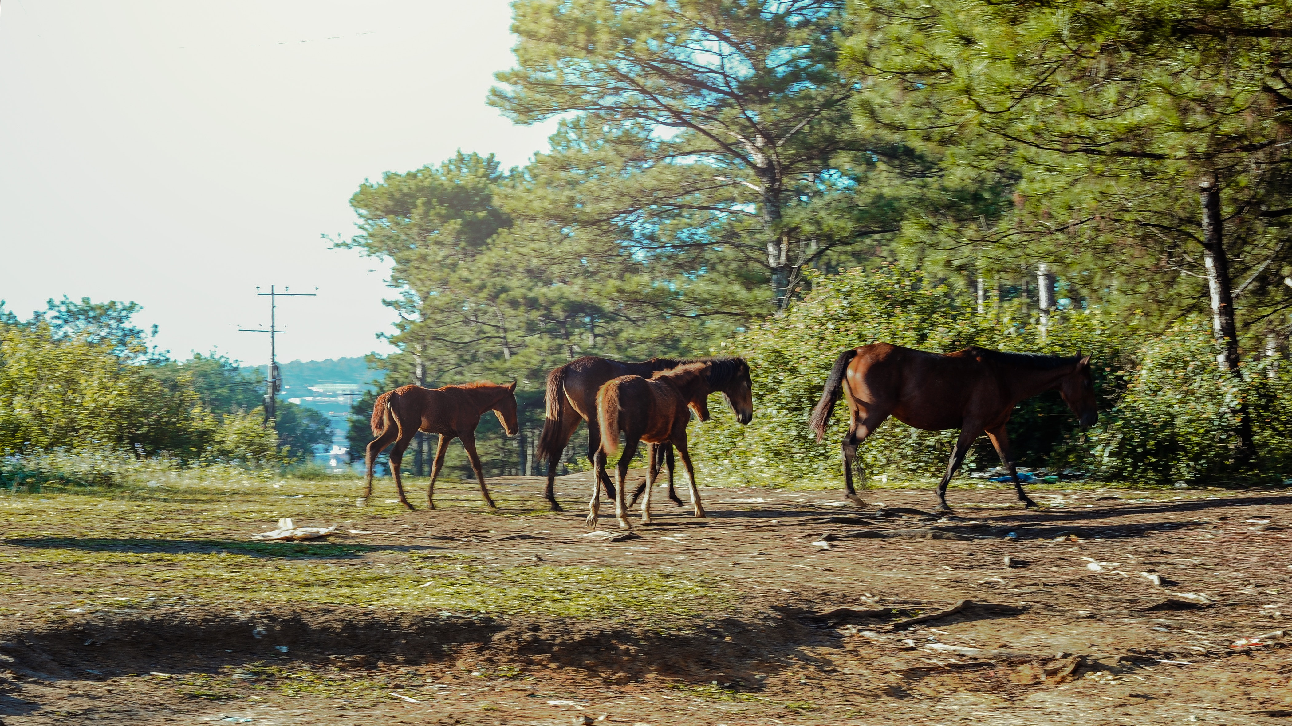 Photo of horses in the forest
