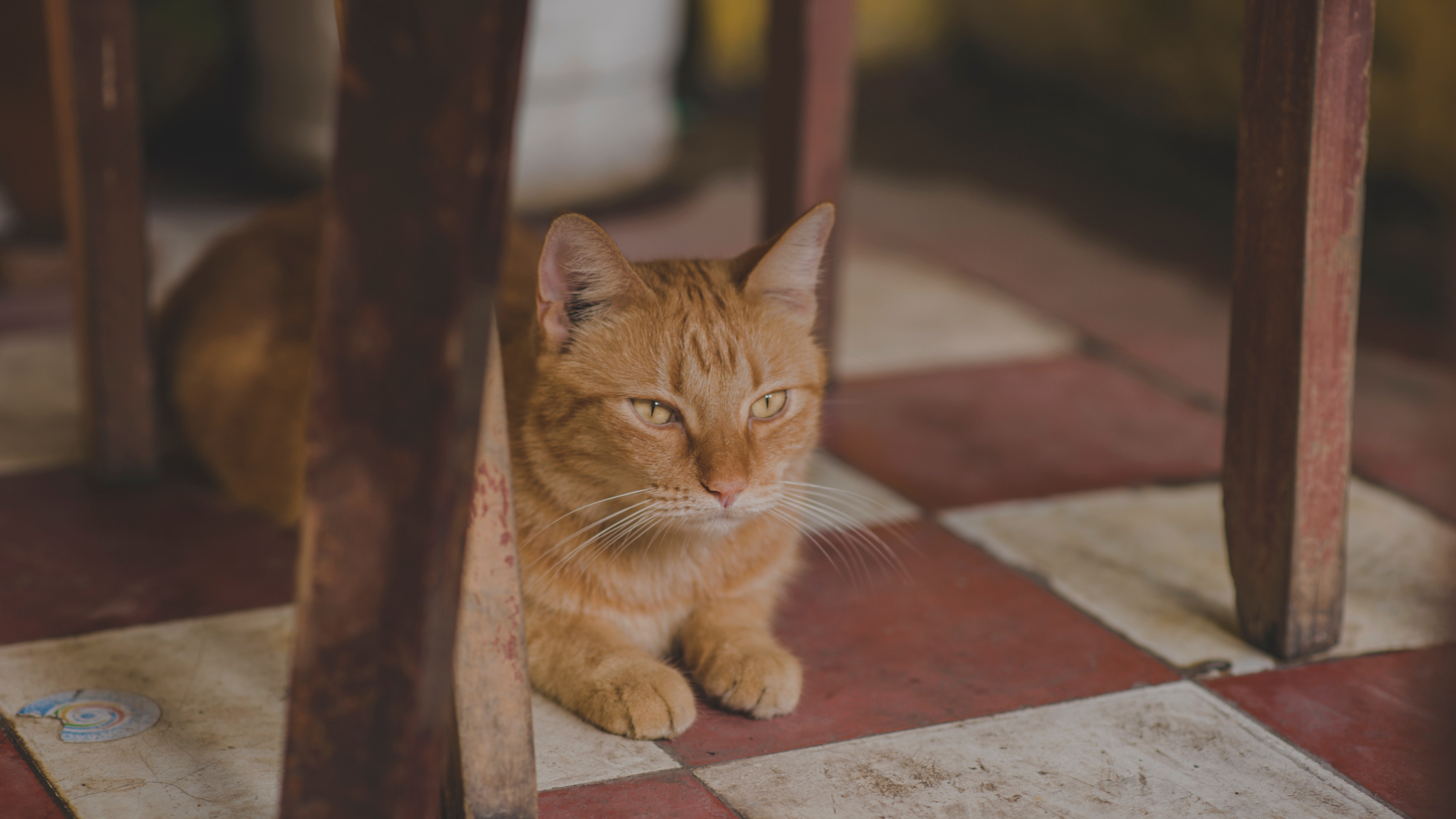 Photo of orange tabby cat under chair
