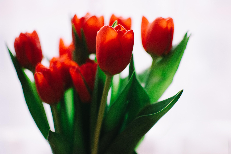 Photo of orange tulips