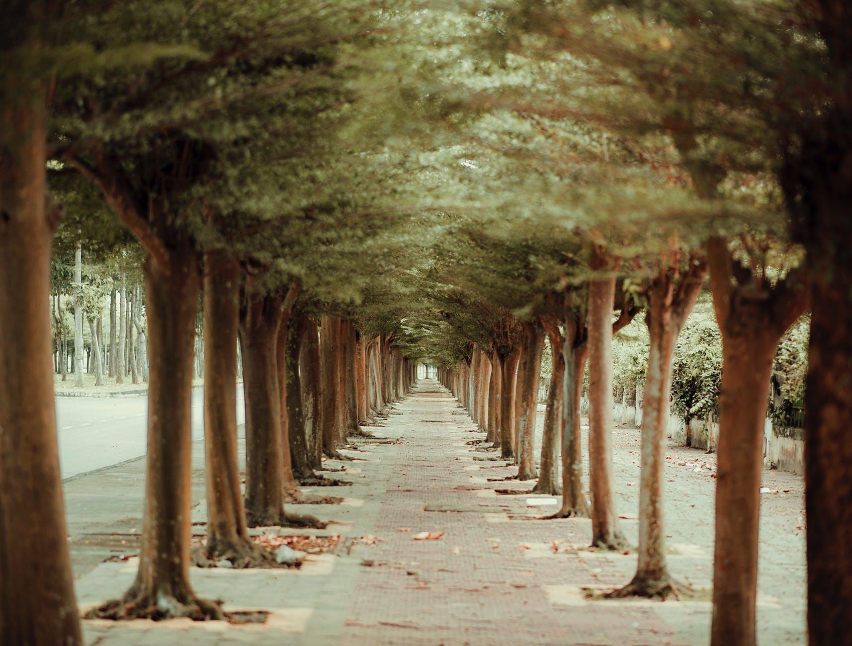 Photo of Pathway In Between Trees, Photo of Pathway In Between Trees