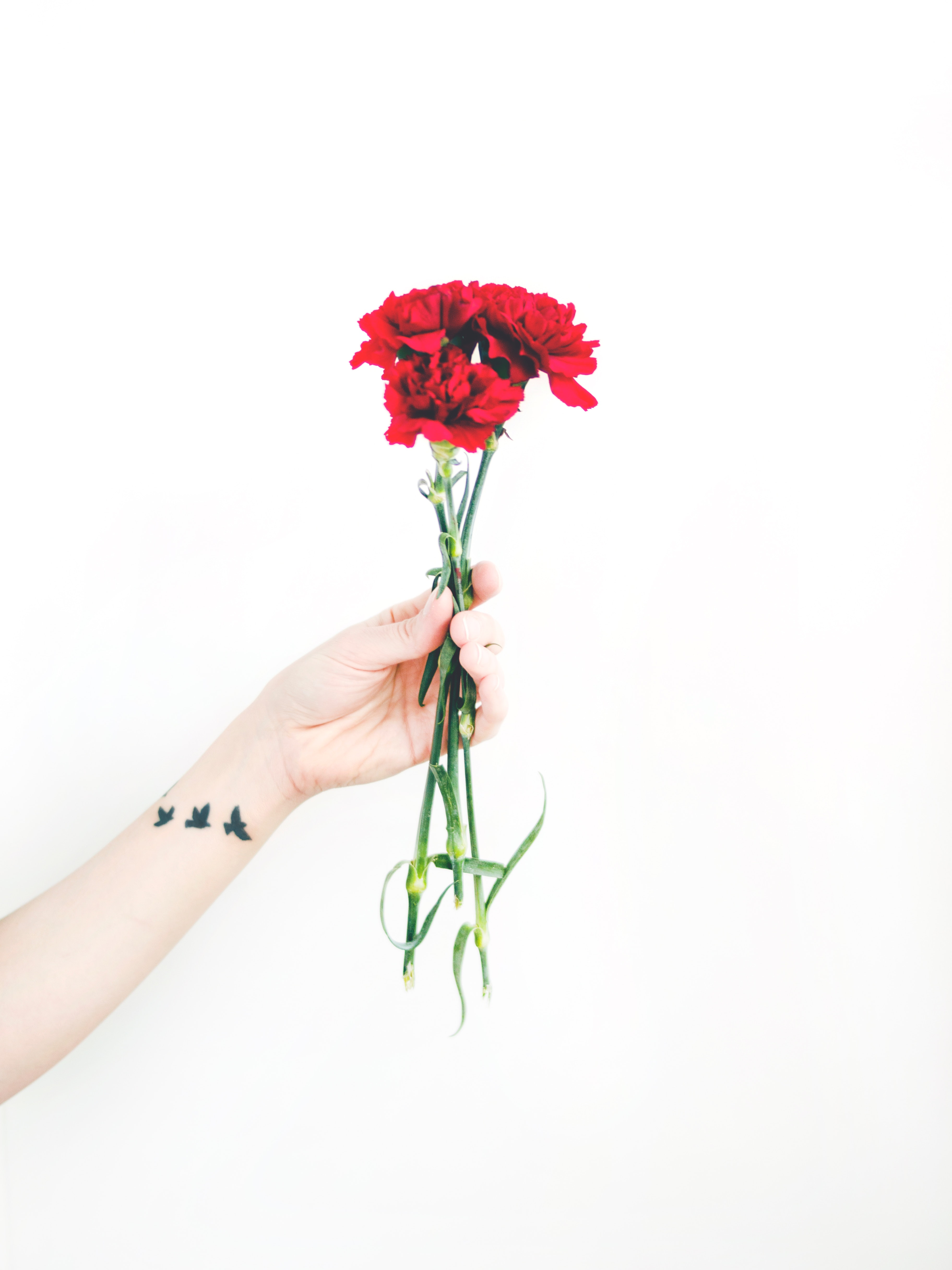 Free photo photo of person holding bouquet of red carnations photo of person holding bouquet of red carnations fresh flowers flowers focus izmirmasajfo