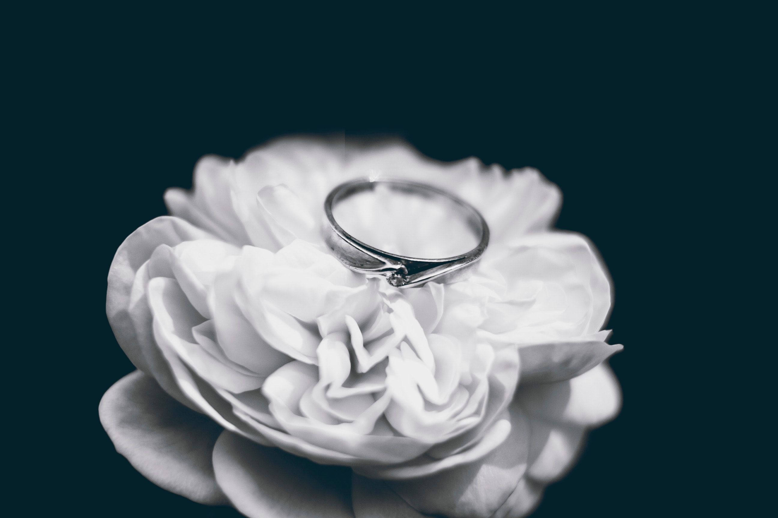 Photo of Silver Ring, Rose, Romantic, Wedding, Wedding ring, HQ Photo