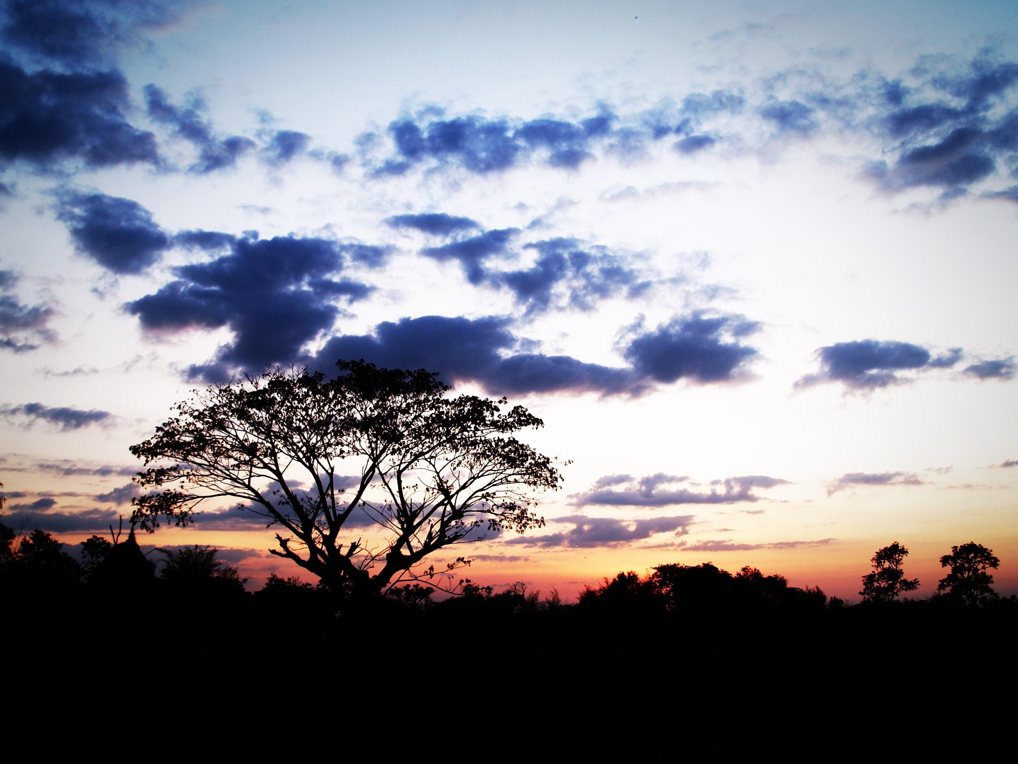 Photo of Sunset, Beautiful, Horizon, Trees, Travel, HQ Photo