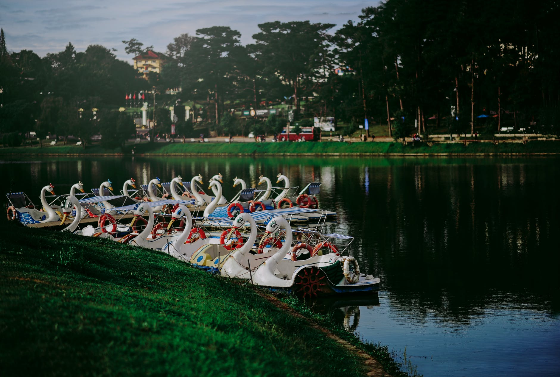 Photo of swan boats near the shore