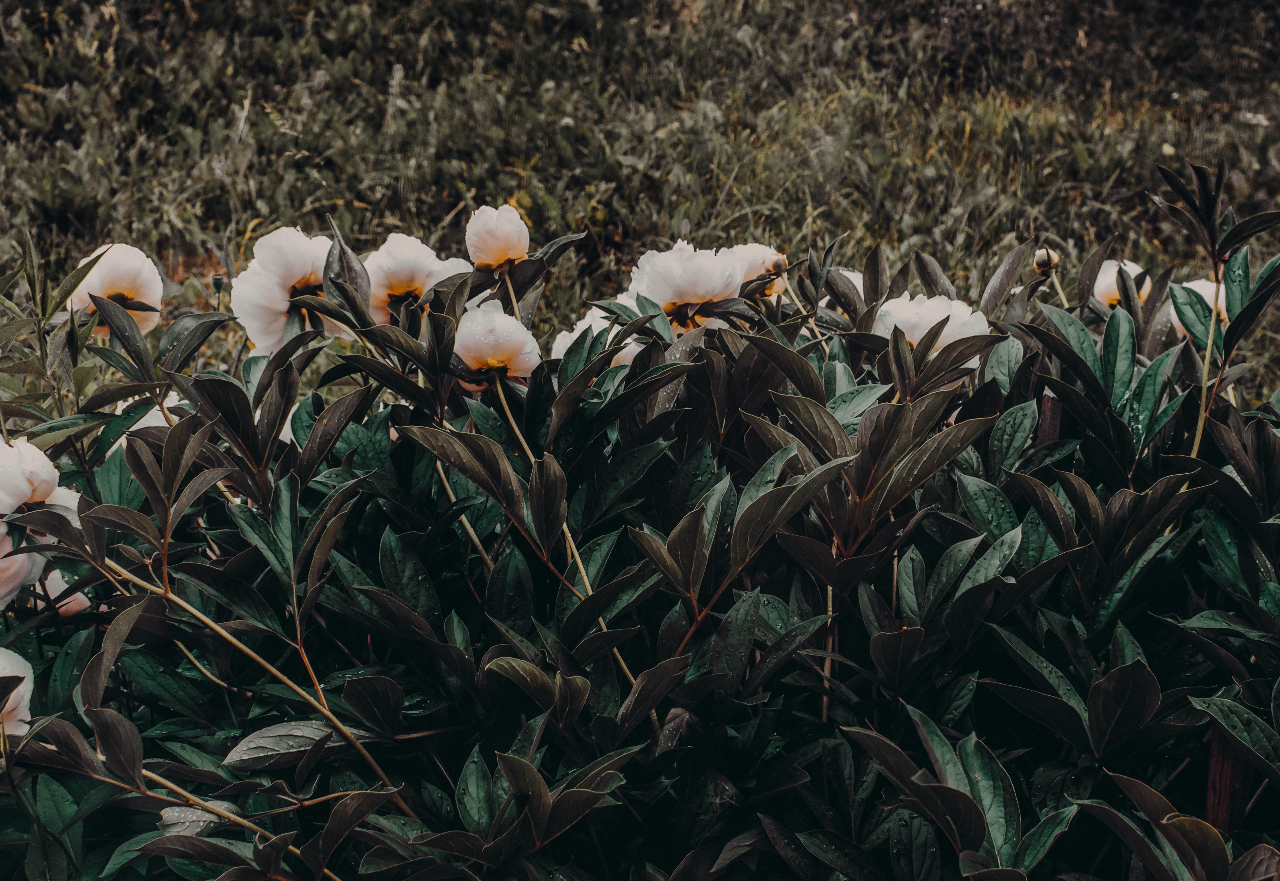 Photo of white-and-orange petaled flowers