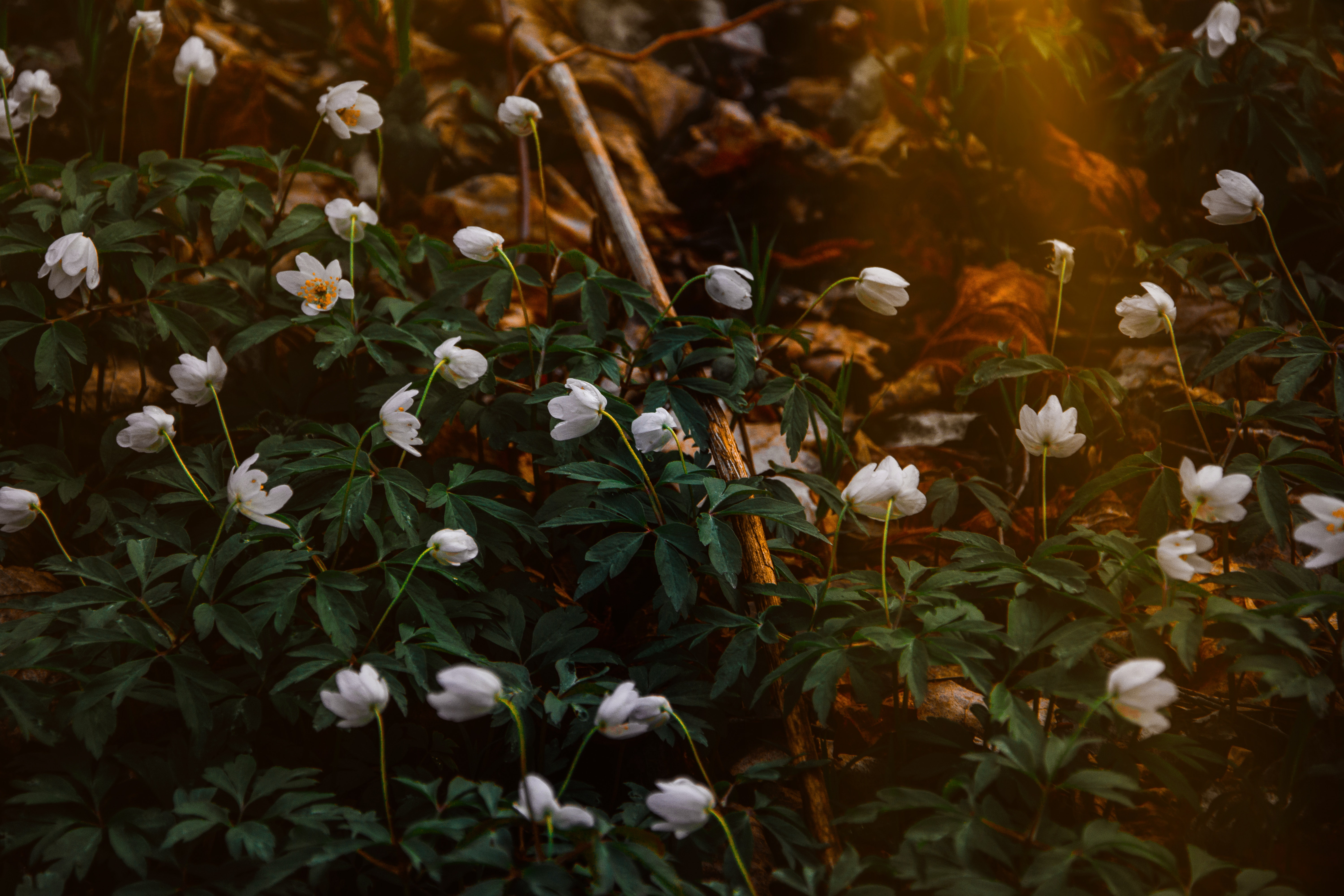 Free photo: Photo of White Flowers - Park, Outdoors, Petals - Free ...
