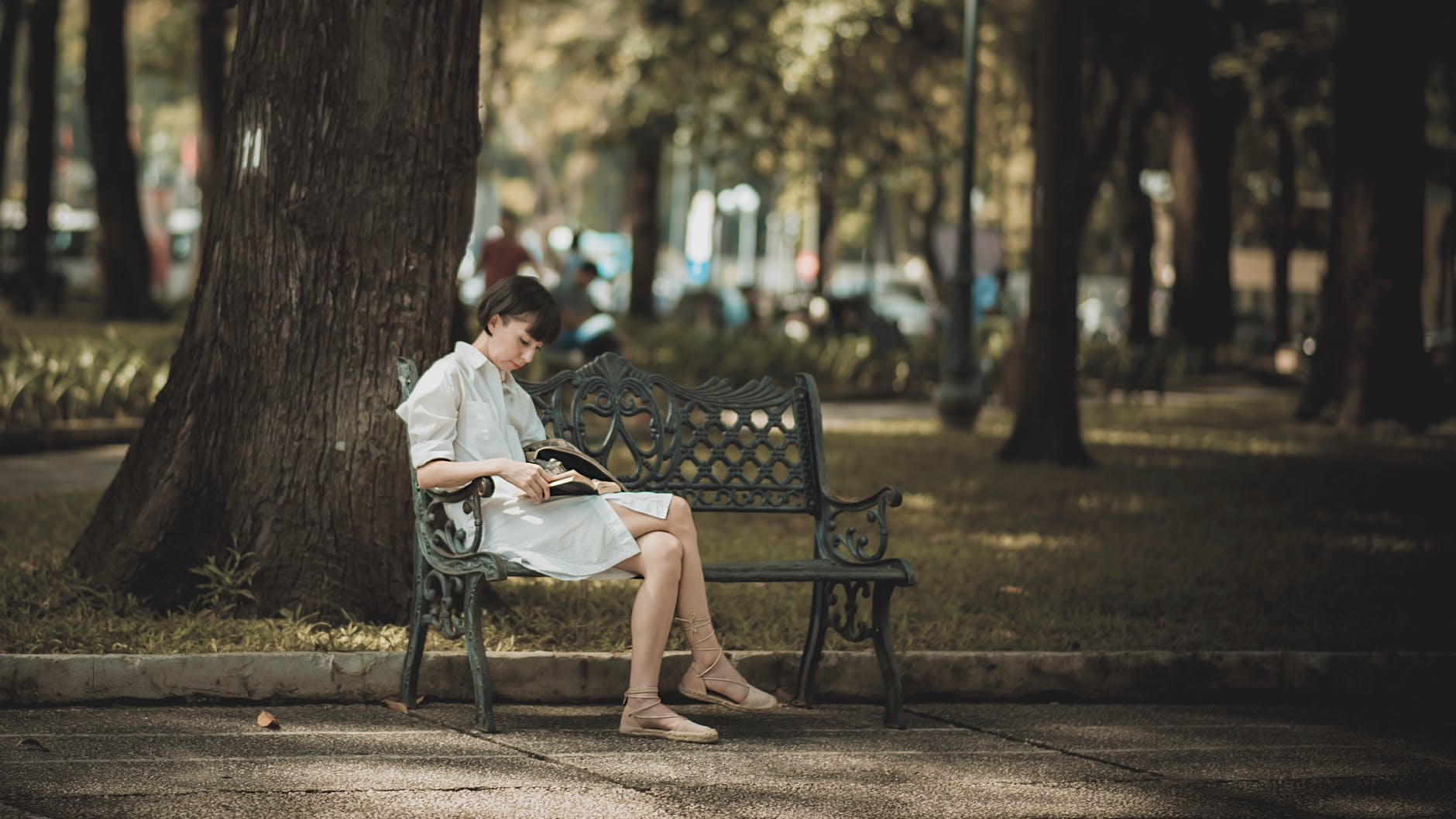 Photo of Woman Sitting in the Bench Near Tree, Photo of Woman Sitting in the Bench Near Tree