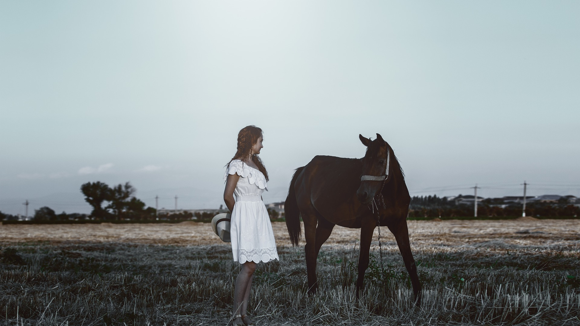 Photo Session with a Horse, Activity, Animal, Farm, Fashion, HQ Photo