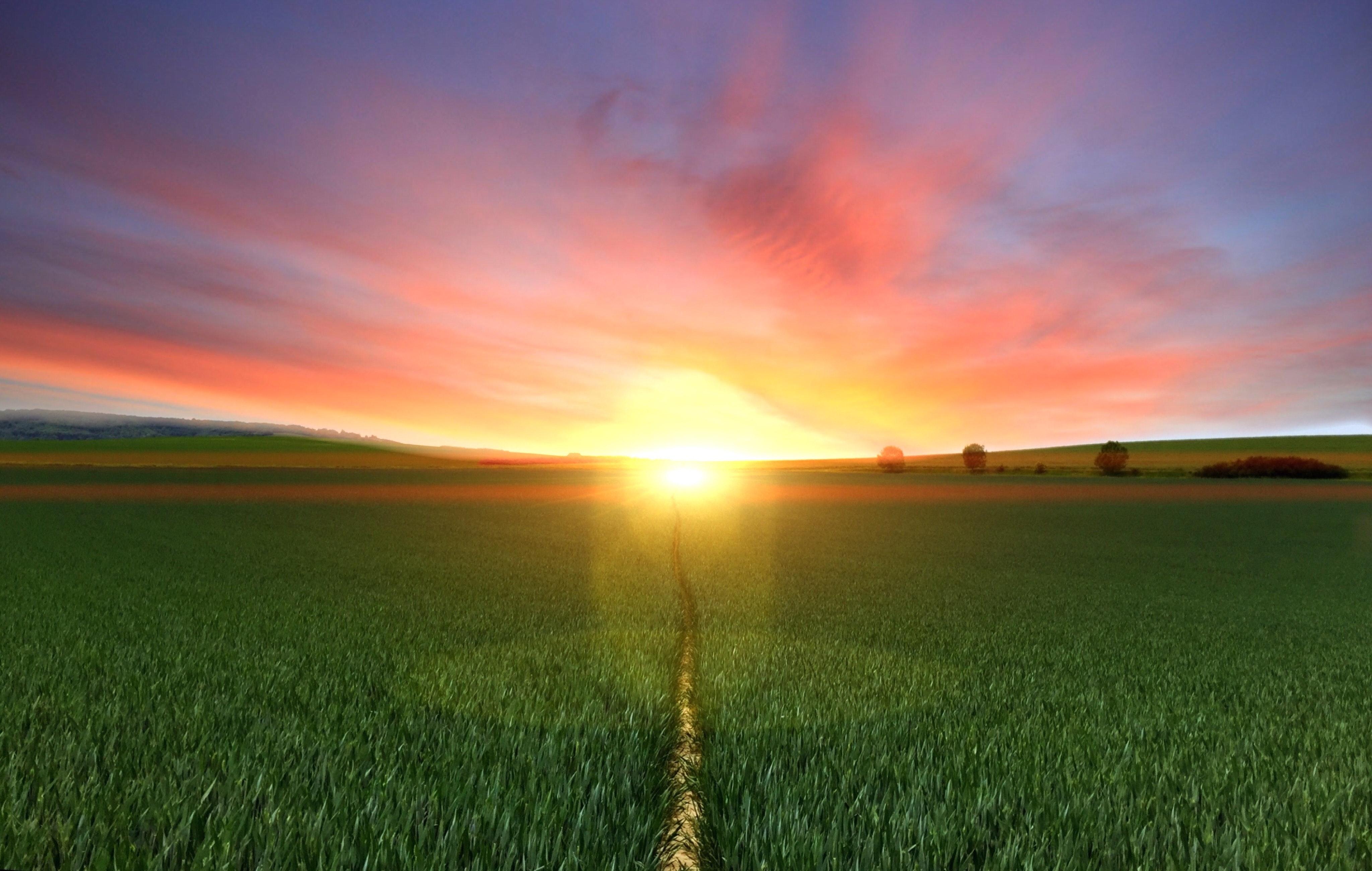 Photography of footpath between green grass field during golden hour