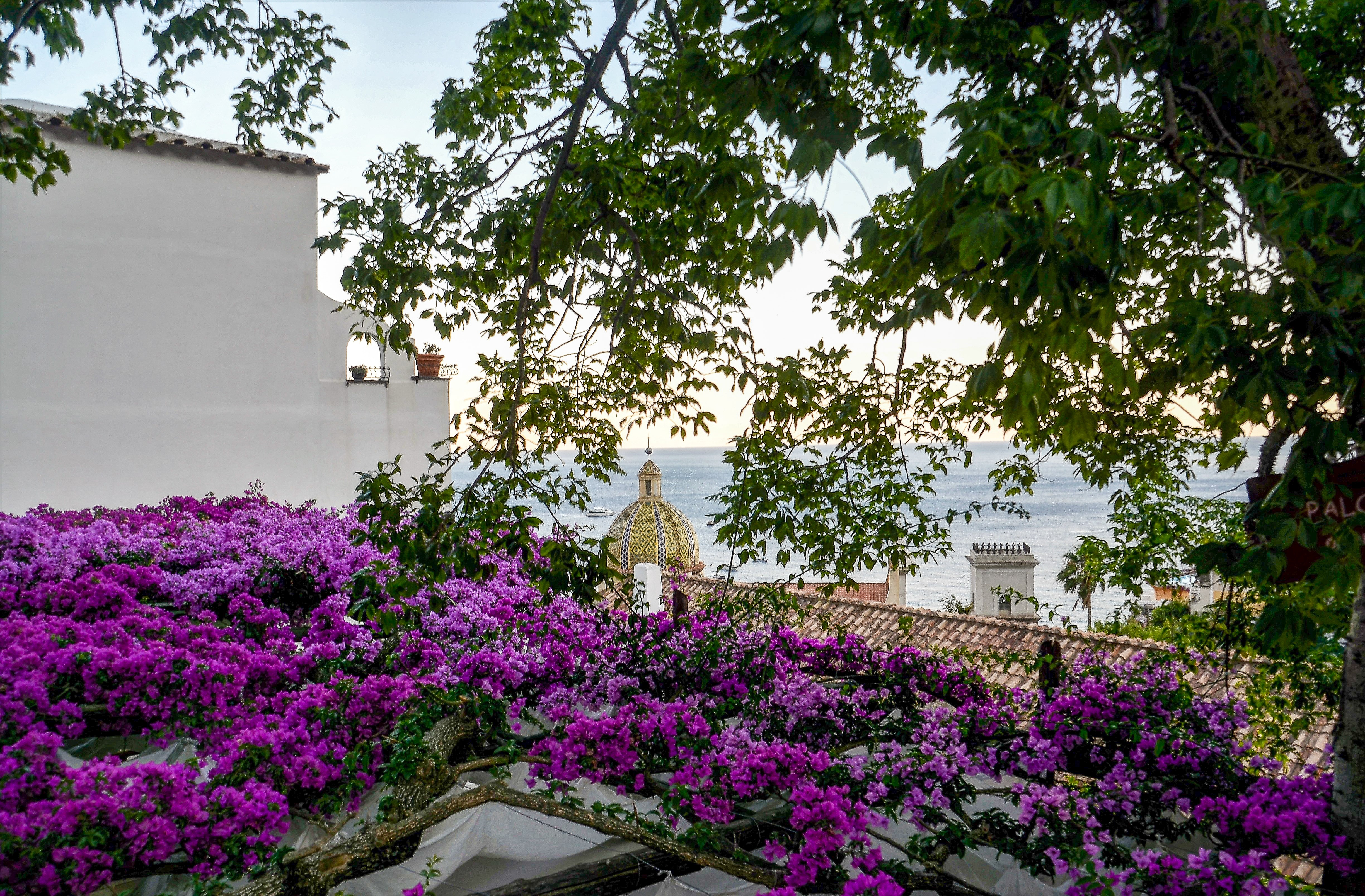 Photography of Purple Flowers, Architecture, Ocean, Village, View, HQ Photo