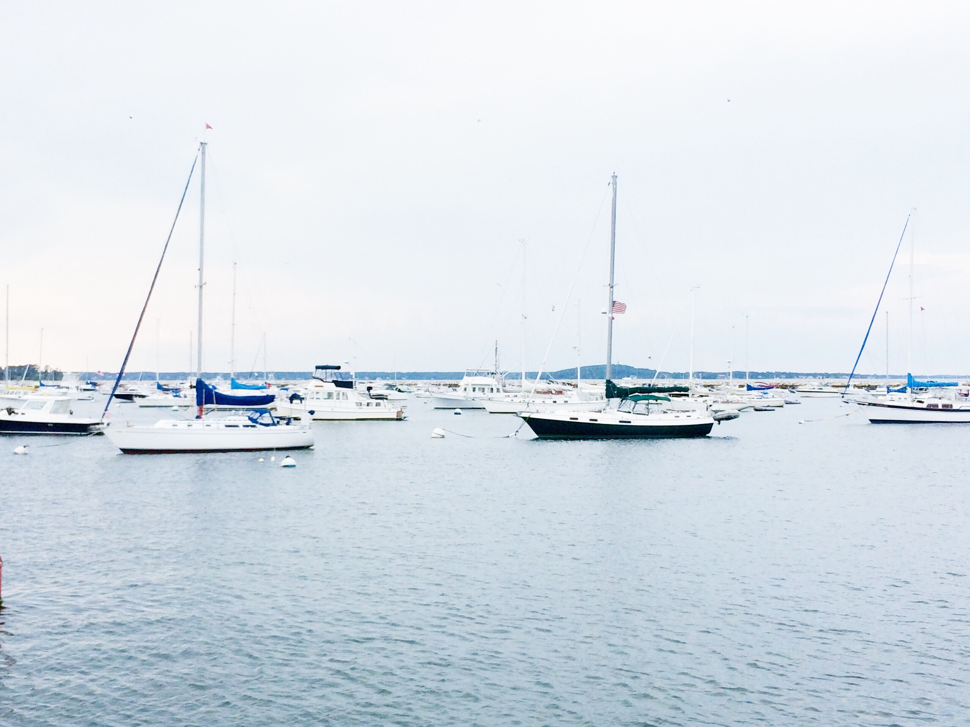 Photography of sailboats in the sea