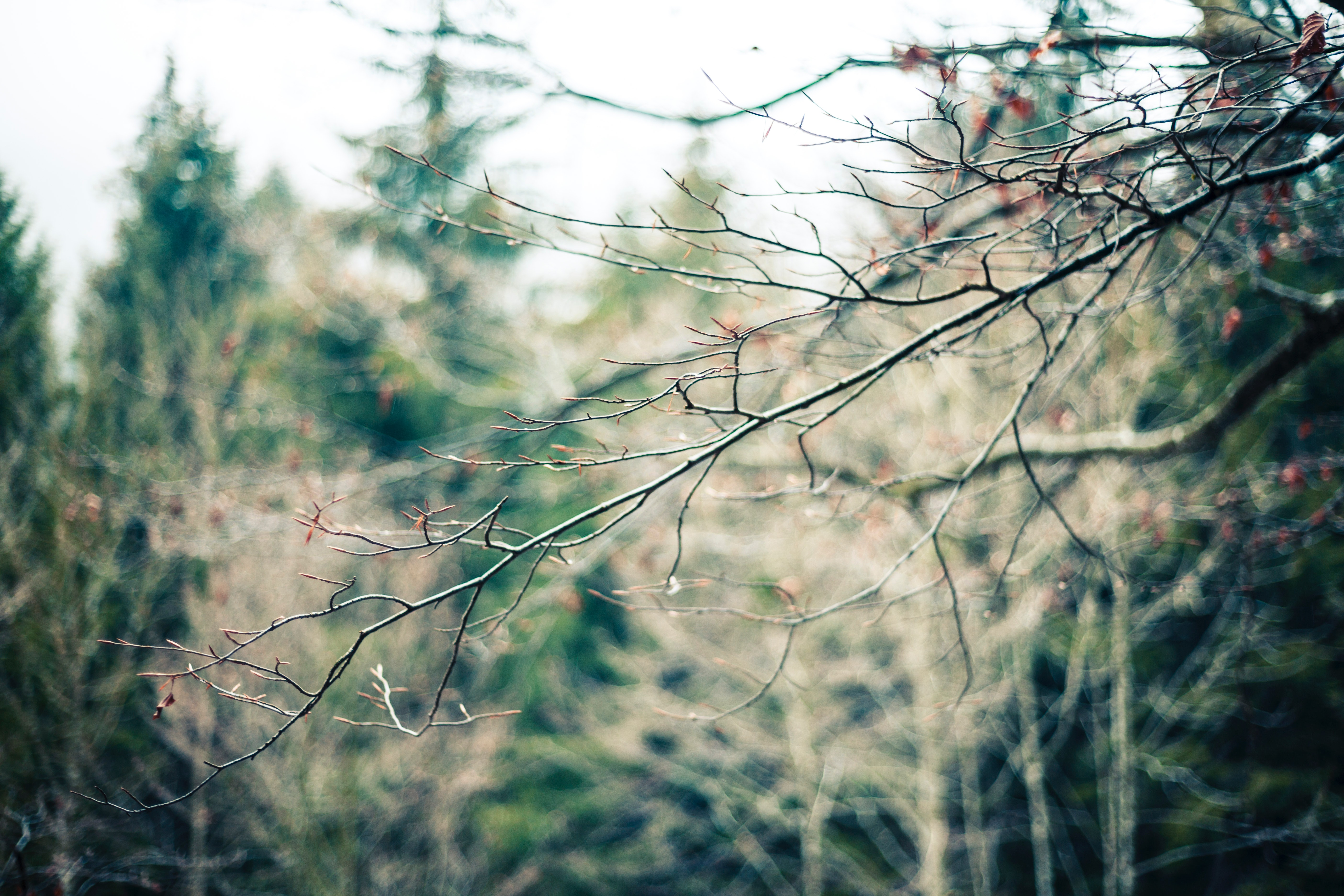 Photography of tree branch