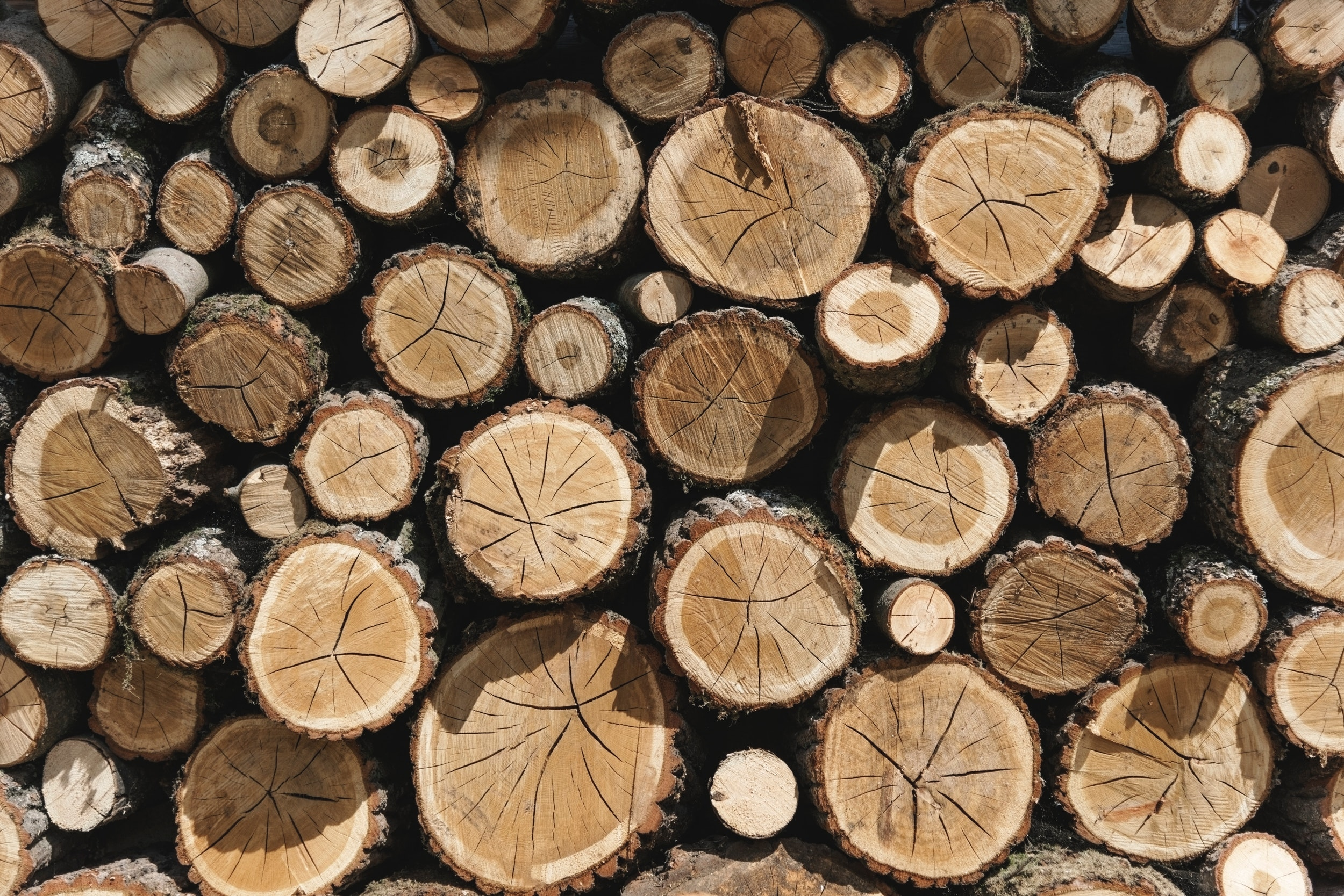 Photography of woodpile