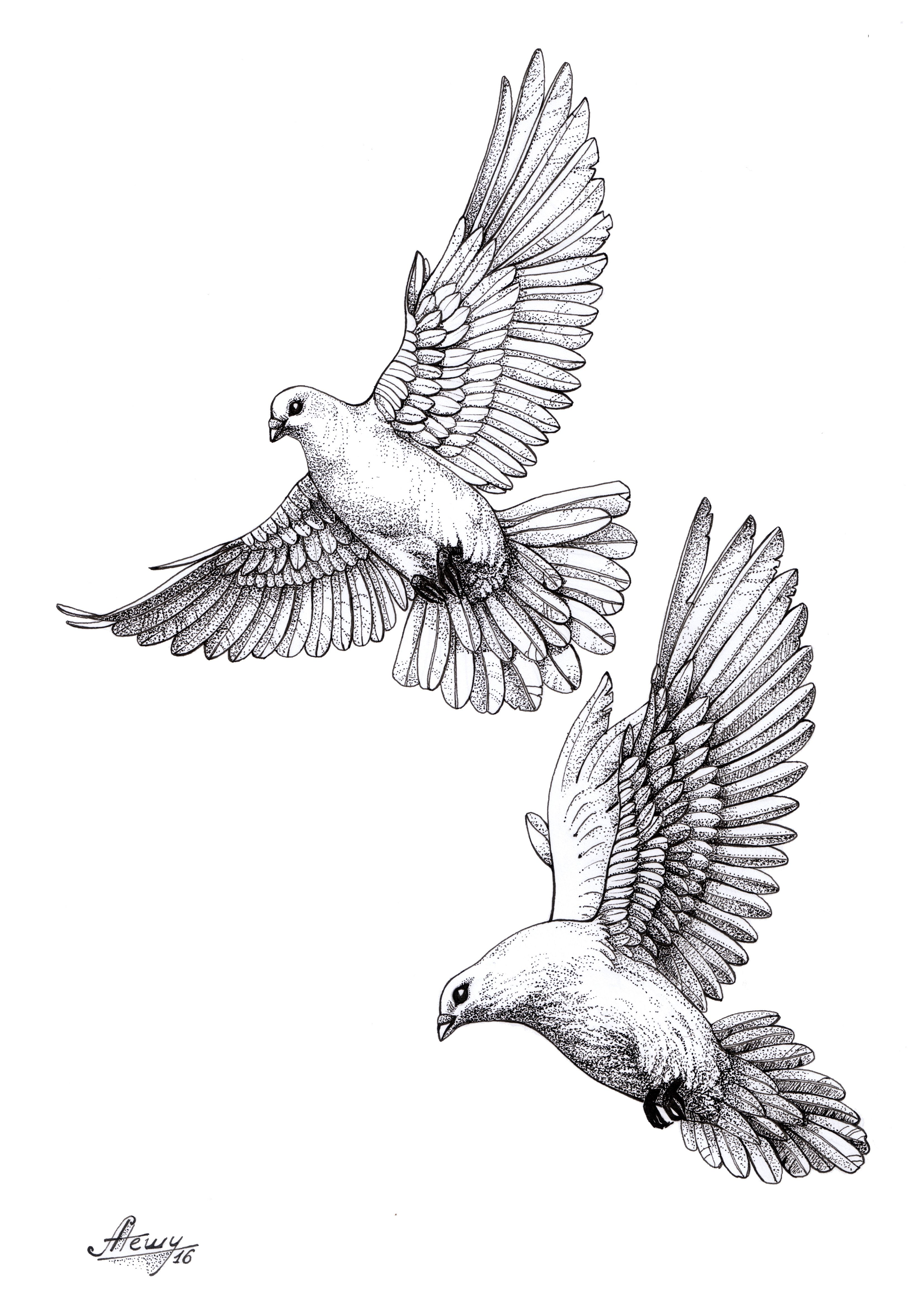 dove#pigeon#sketch | Drawings | Pinterest | Dove pigeon, Sketches ...