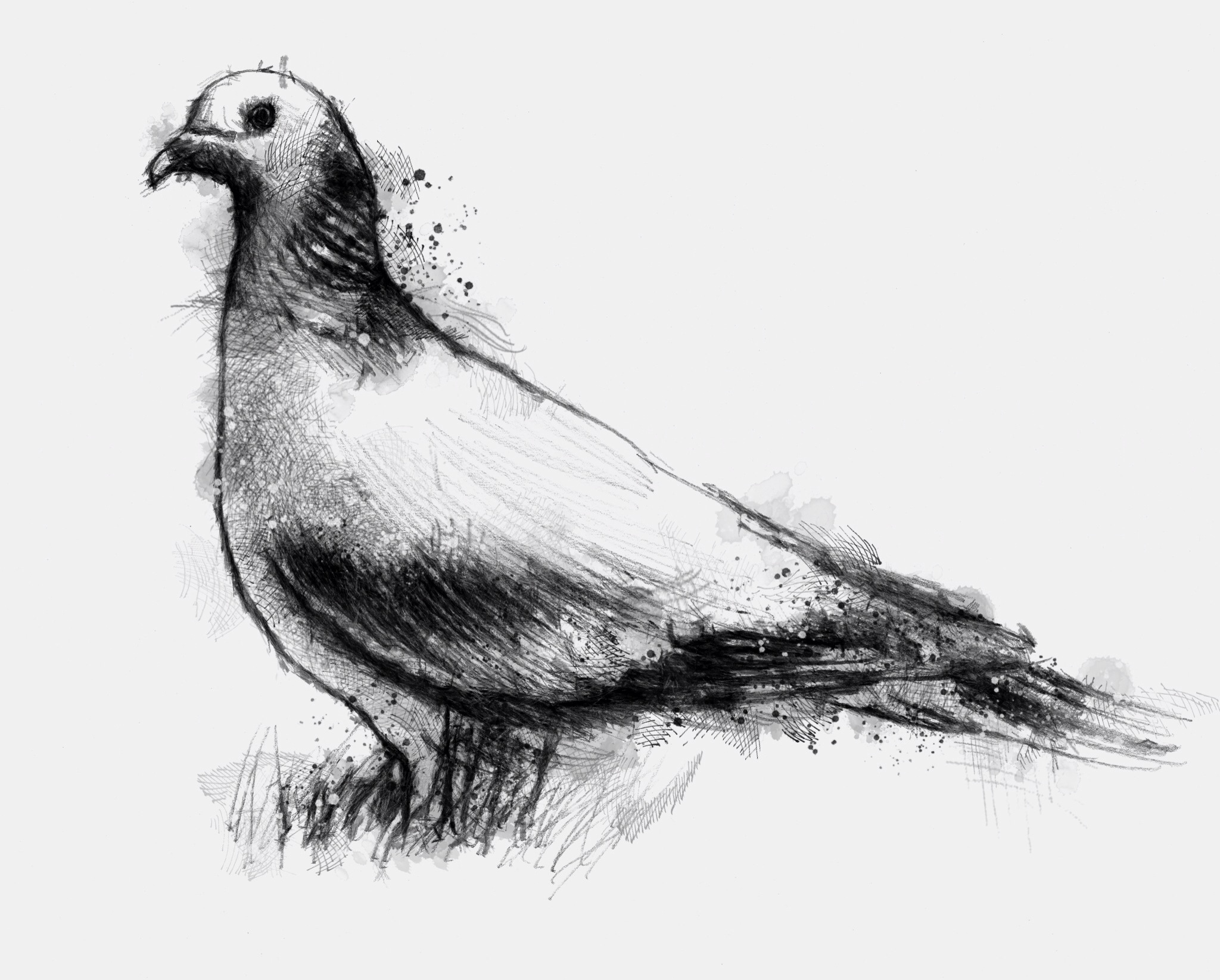 Wood pigeon | Pigeon bird, Drawing sketches and Sketches
