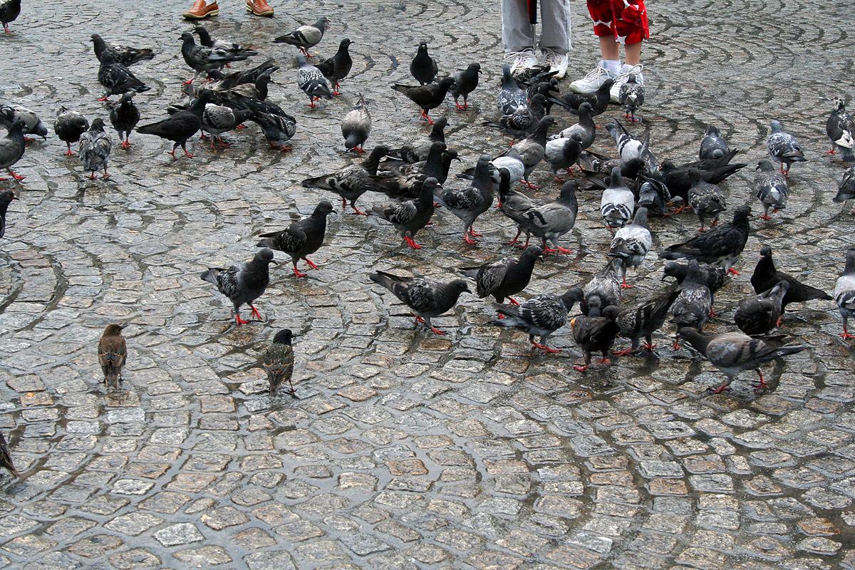 Pigeons, Amsterdam, Bird, Dam, Dedam, HQ Photo