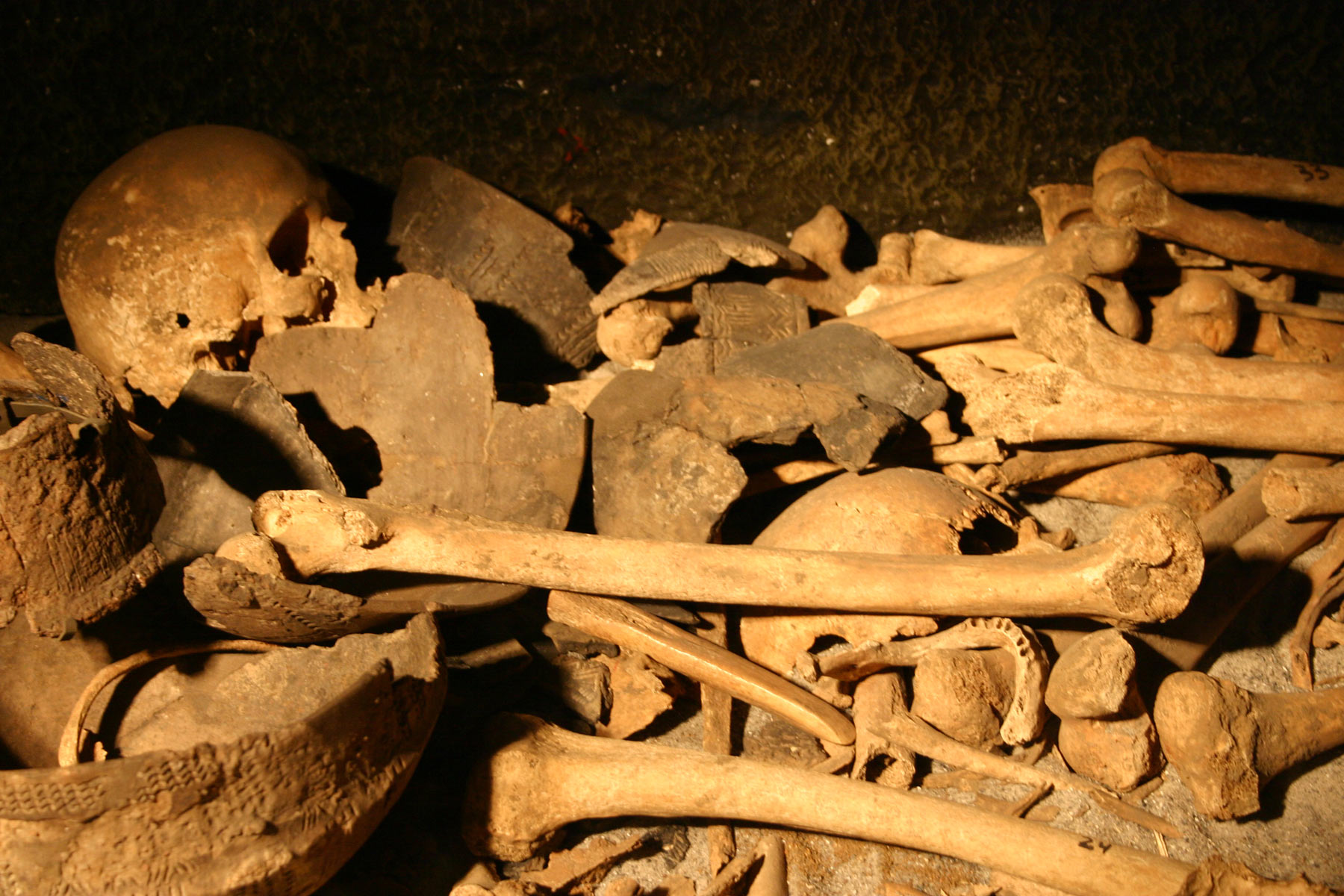 Pile of bones and skulls, Remains, Skulls, Pile, Bones, HQ Photo