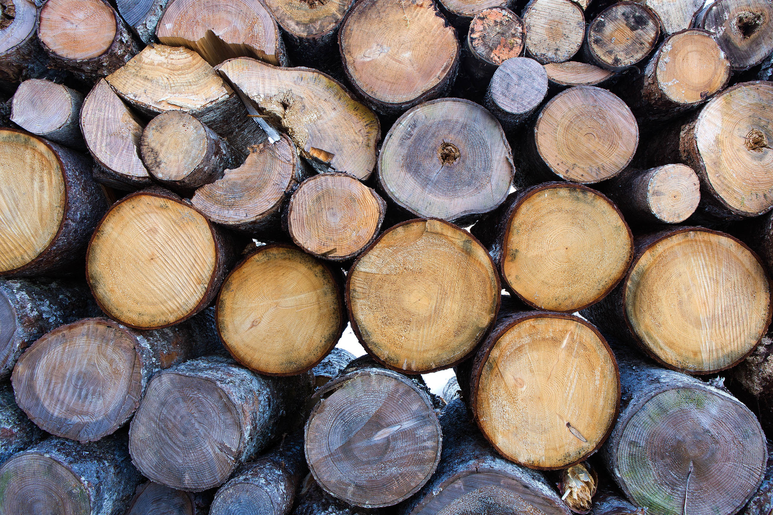 Pile of wood logs photo