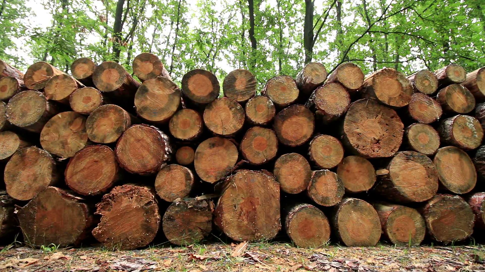 Big pile of wood in a forest road Stock Video Footage - Videoblocks