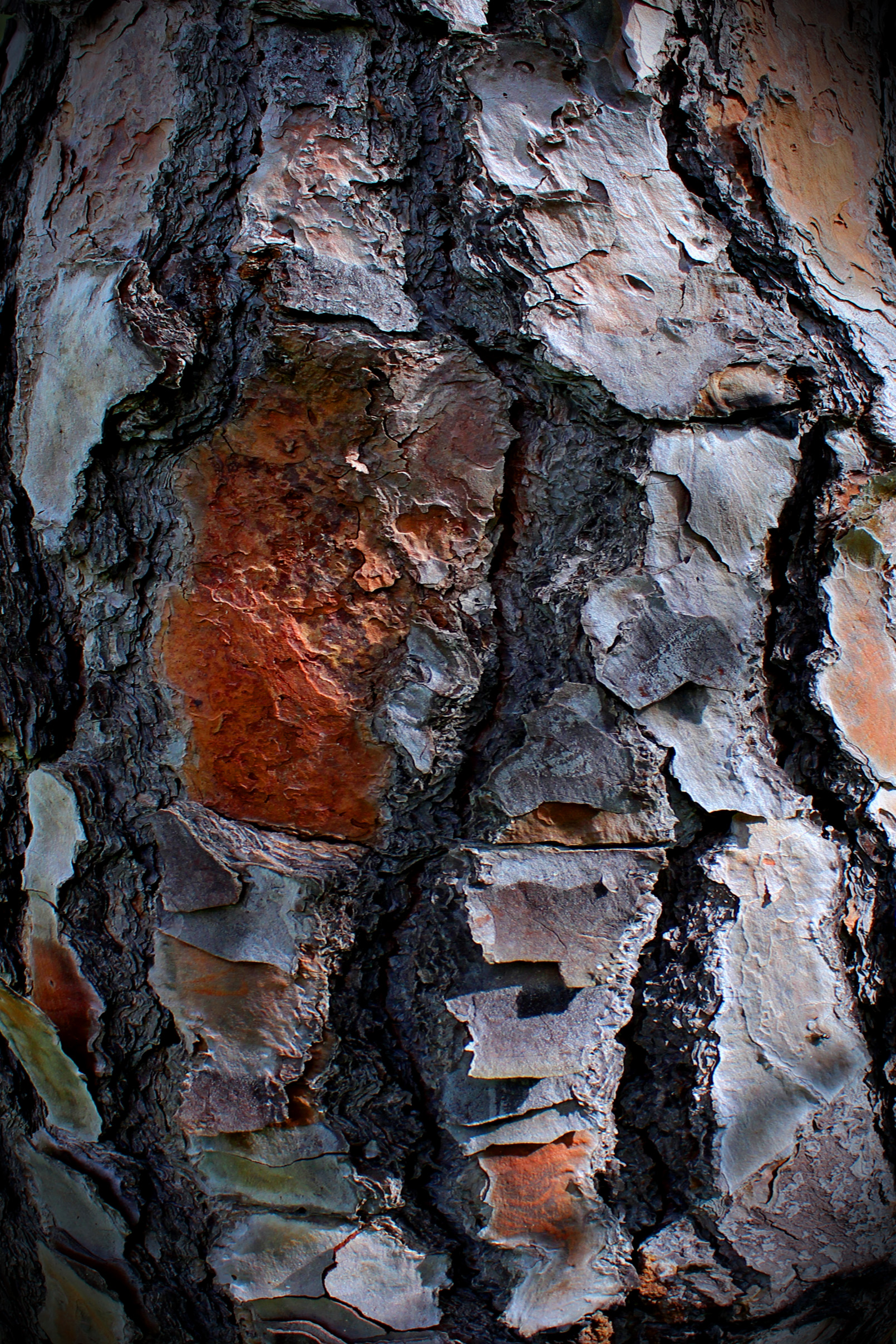 Pine tree bark Texture, Abstract, Surface, Old, Peel, HQ Photo