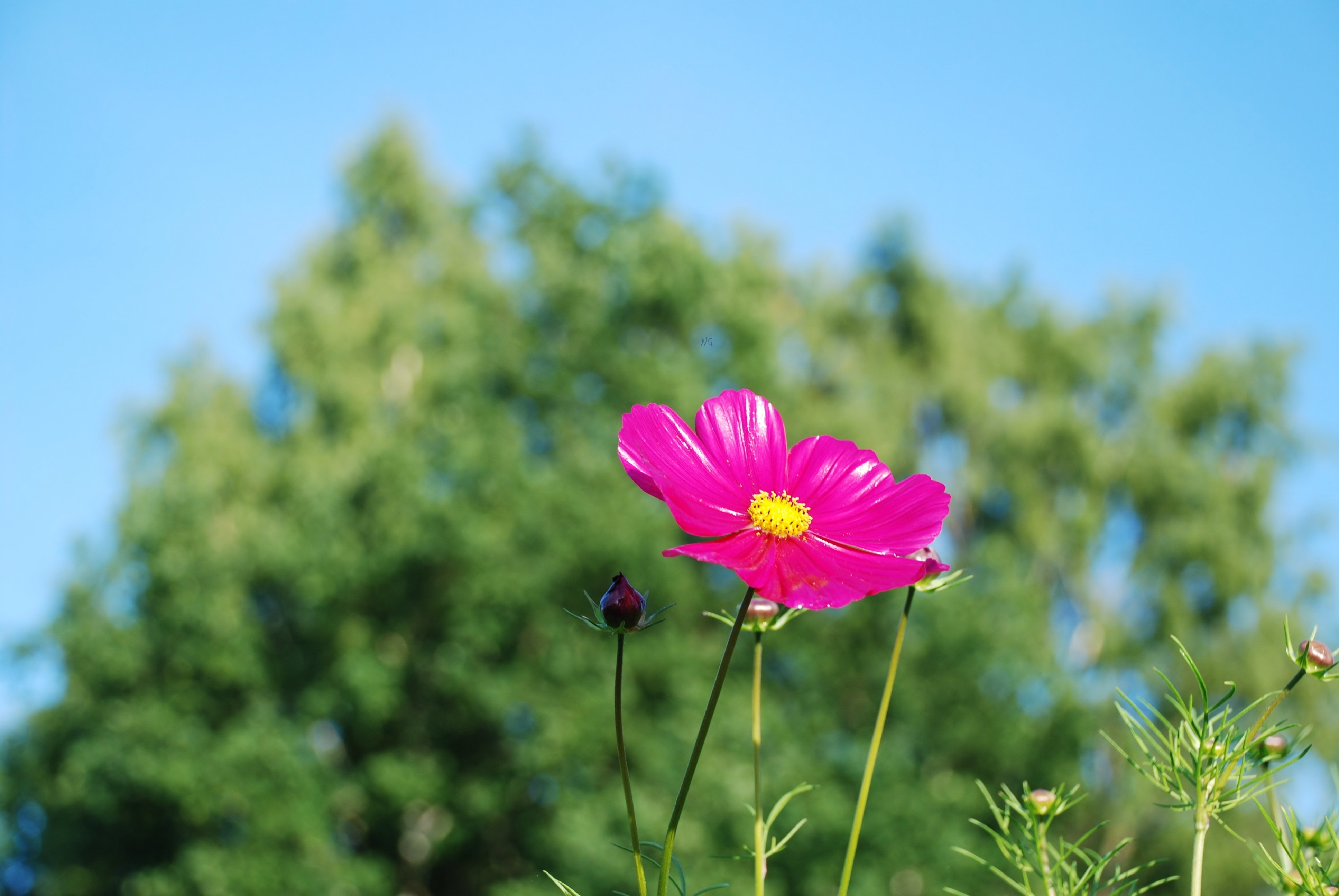 Pink and Yellow Flower, Macro, Plant, Nature, Flower, HQ Photo