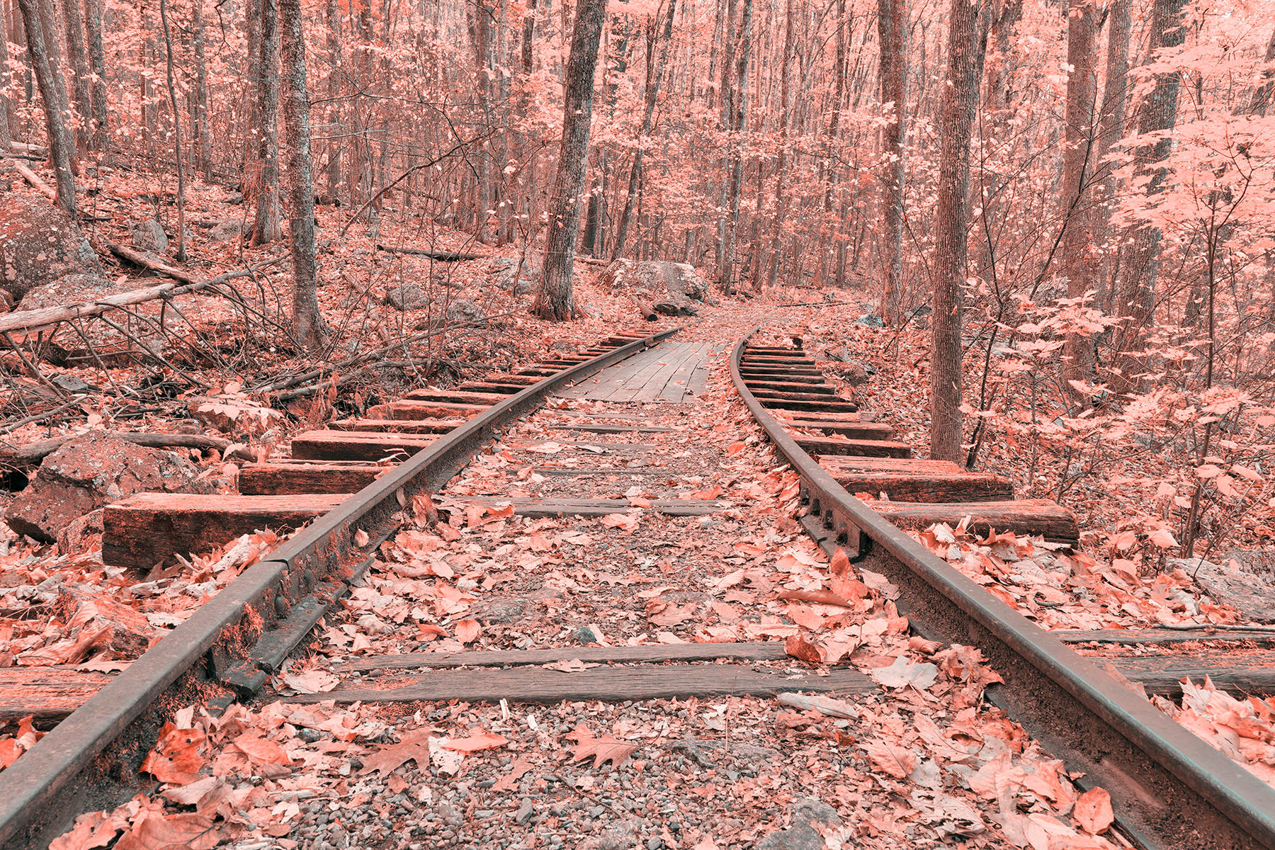 Pink autumn logging railroad - hdr photo