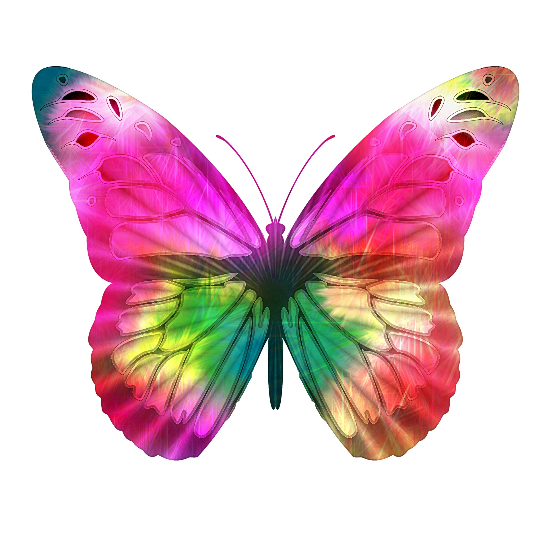 Bright Pink Butterfly Free Stock Photo - Public Domain Pictures