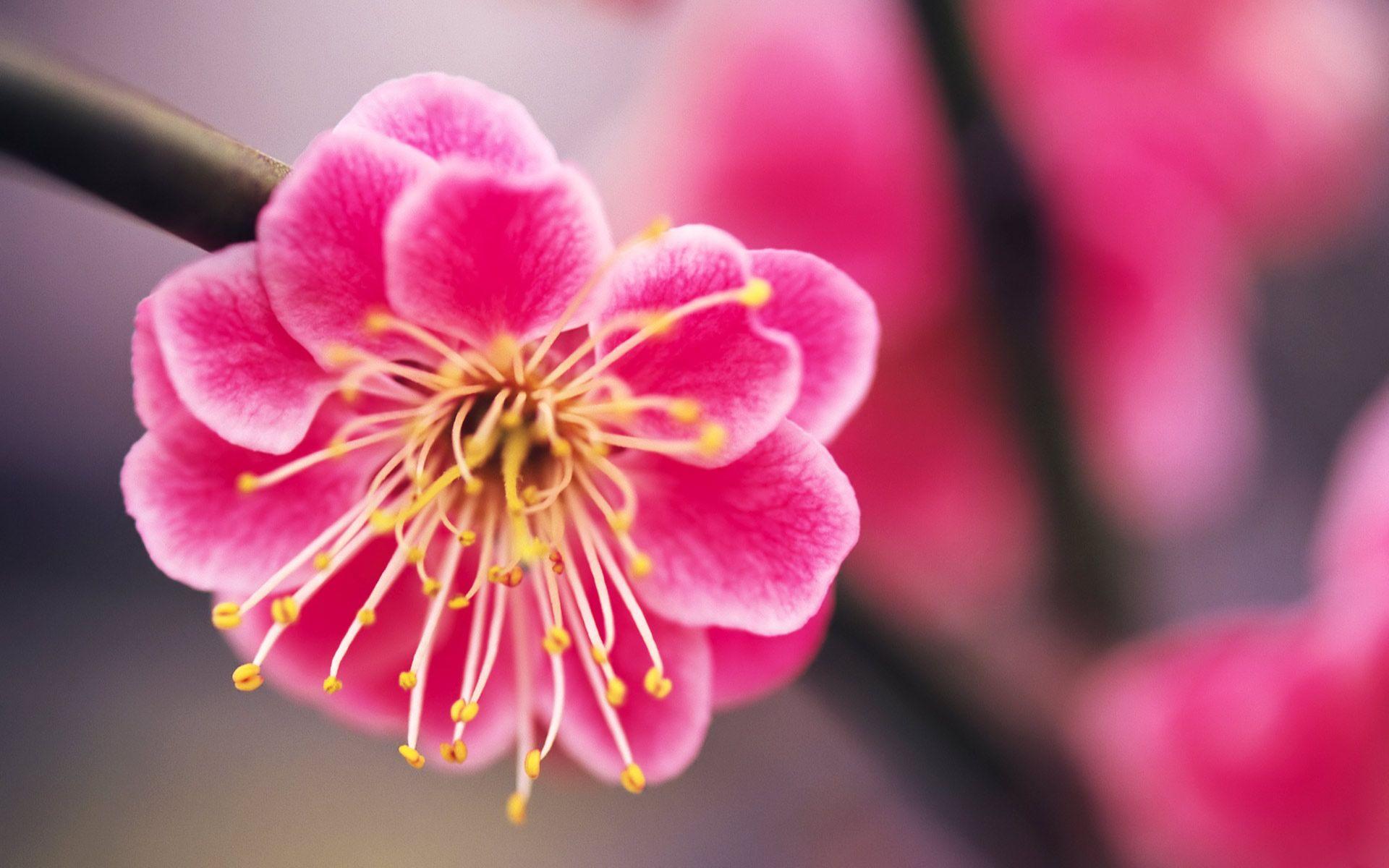 Free Photo Beautiful Pink Flower Pink Plant Summer Free