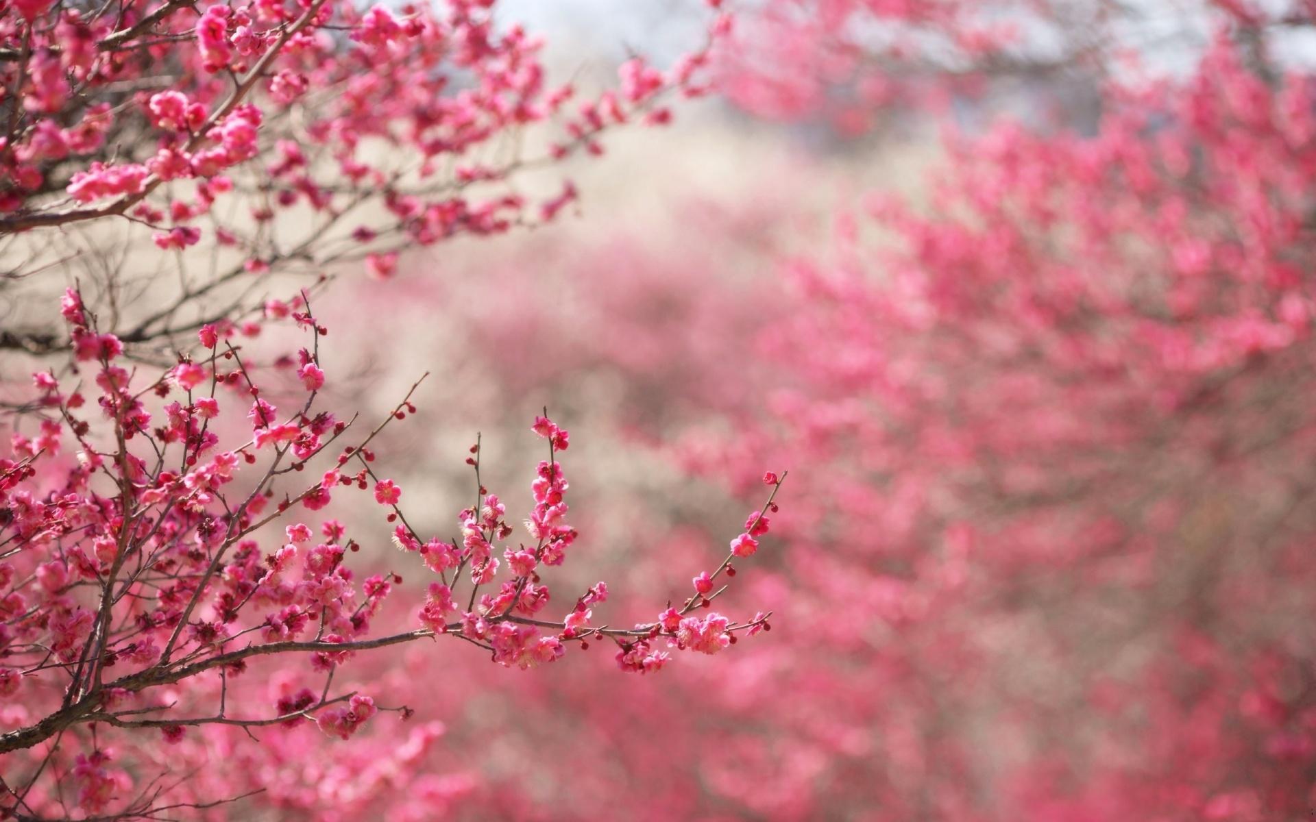 Pink Flower Wallpaper Tumblr 17813 1920x1200 px ~ HDWallSource.com