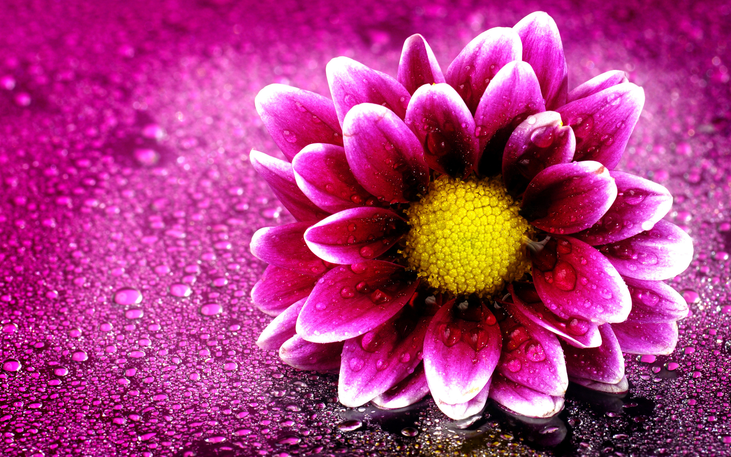 Pink Flower 4K Wallpapers | HD Wallpapers | ID #19676