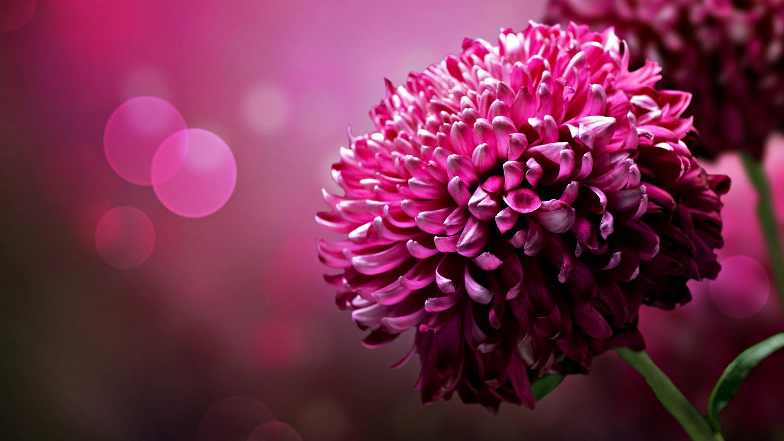 Free photo pink flowers plant pretty pink free download jooinn desktop of pink flowers hd inn flower picture wallpaper pics mightylinksfo